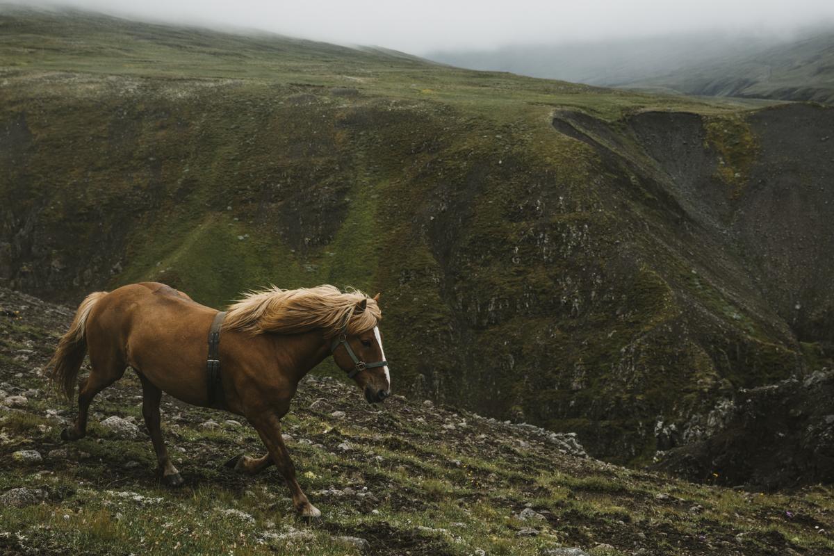 Iceland by Horseback