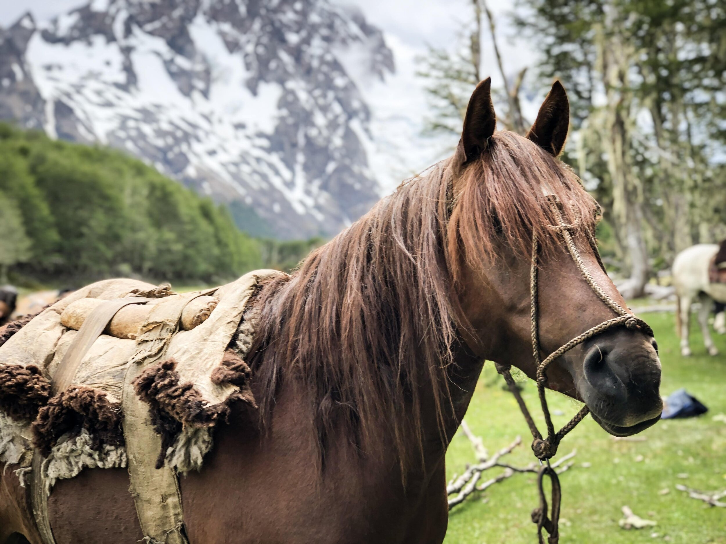 Horse supported details2.JPG