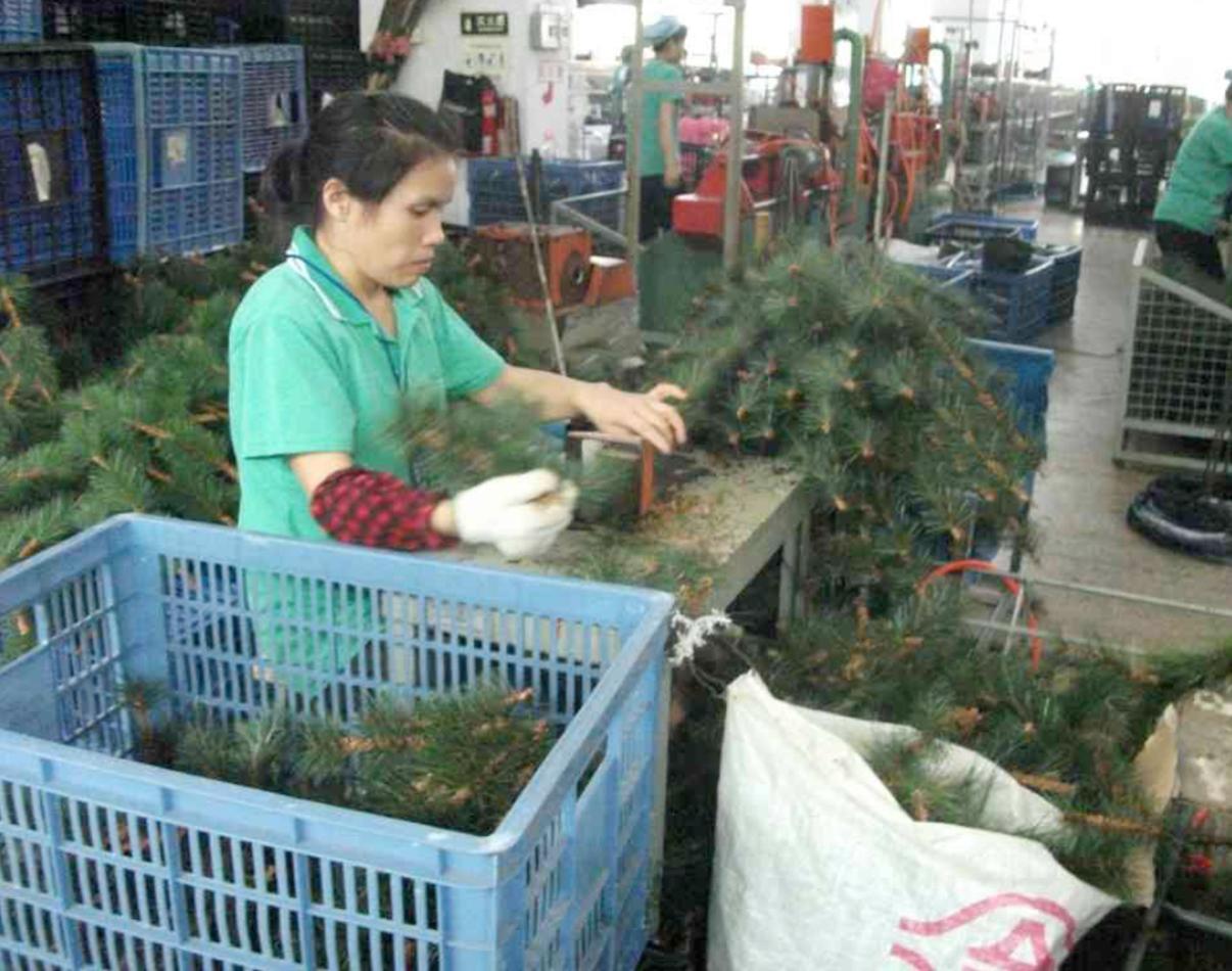 Tree production