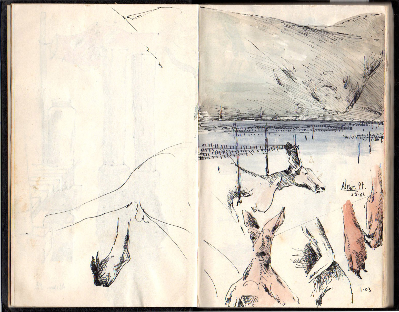 Drawing Book 6 1988  Kangaroos in Peats Crater and Alison Pt