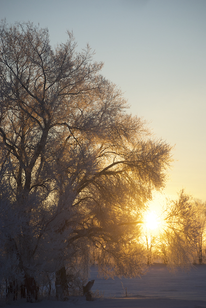 FrostMorning.jpg