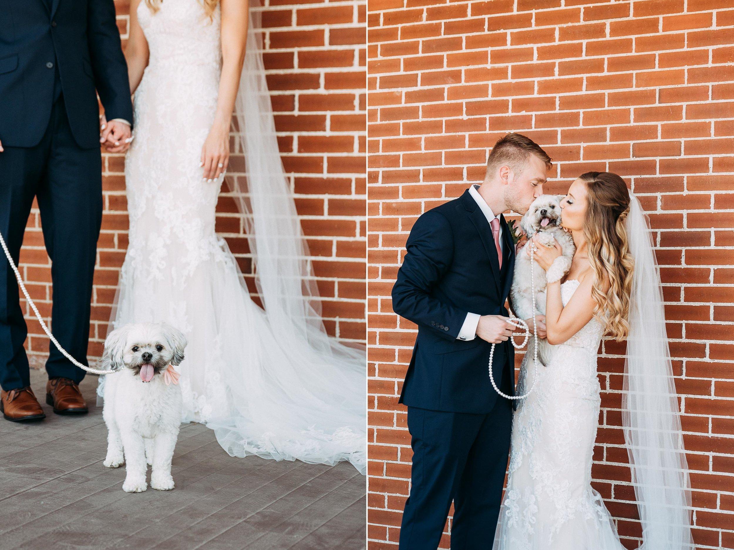 20-WeddingsattheBroz_Minnesota_WeddingBlog_Dog.jpg