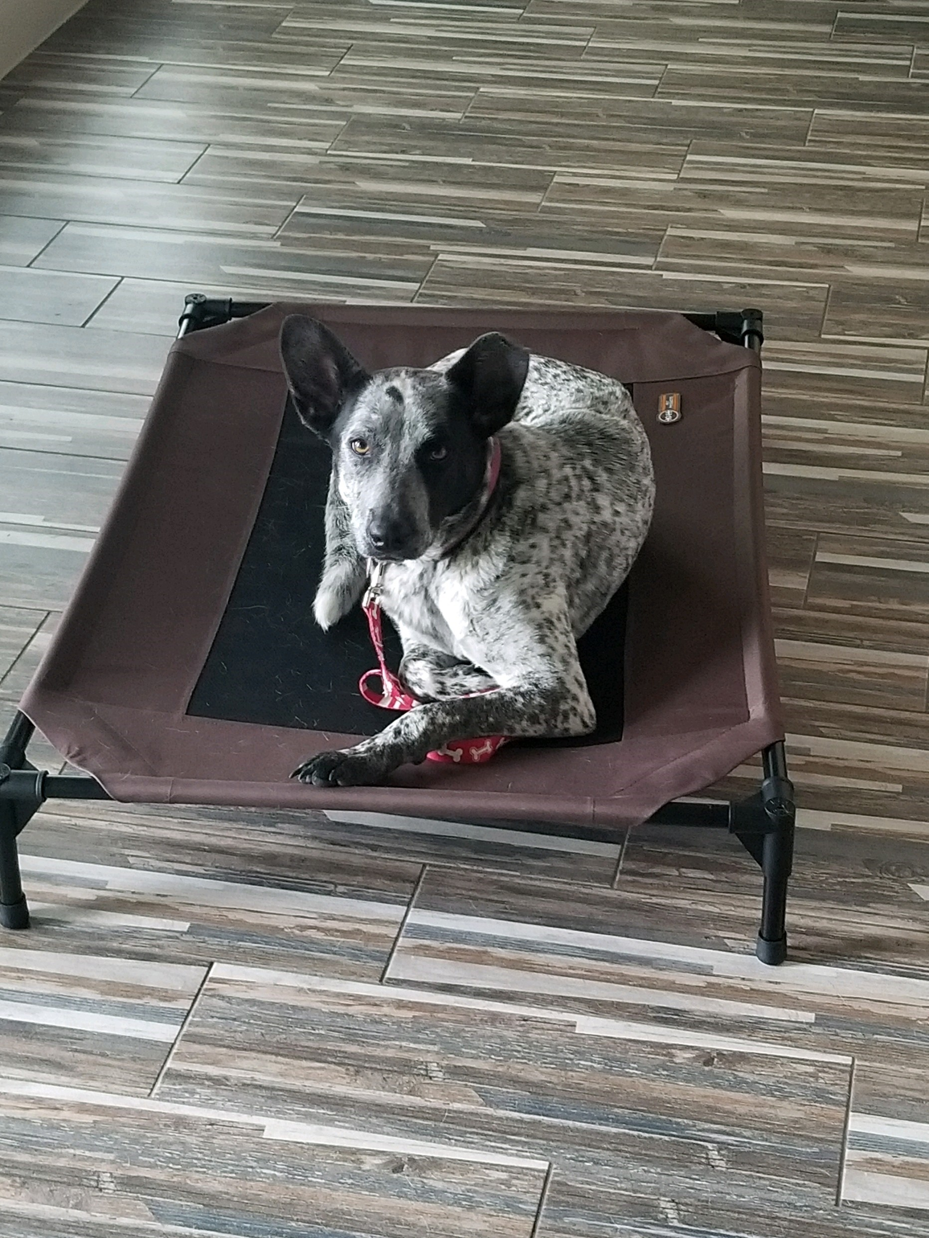Razzy - Our family chose the 5 week course where we met once per week. Our dog, Razzy, who is a 2 yr old Blue Heeler/Australian Shepherd mix, was aggressive/very protective towards other people. This training program trained us as well as Razzy.
