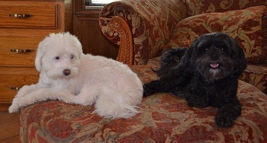 CindiLoo and SugarBear - Sue came to our house and was so helpful with our doggie issues. We are practicing not jumping and when to bark ( or not bark) we have new leashes and look forward to traveling with well behaved dogs. Thank you Sue!!Iris Martin, San Marcos, TX