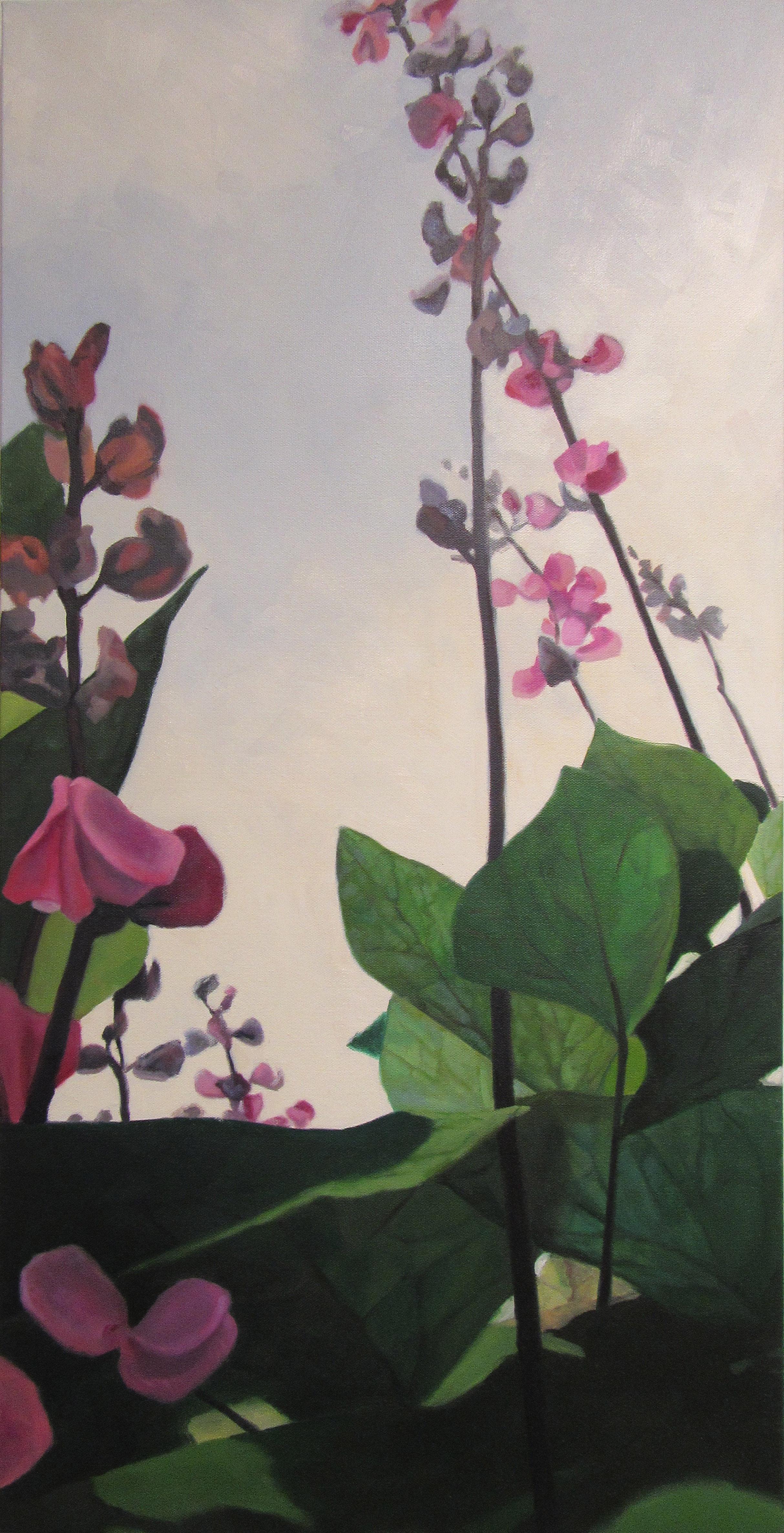 Hyacinth Bean Vine4