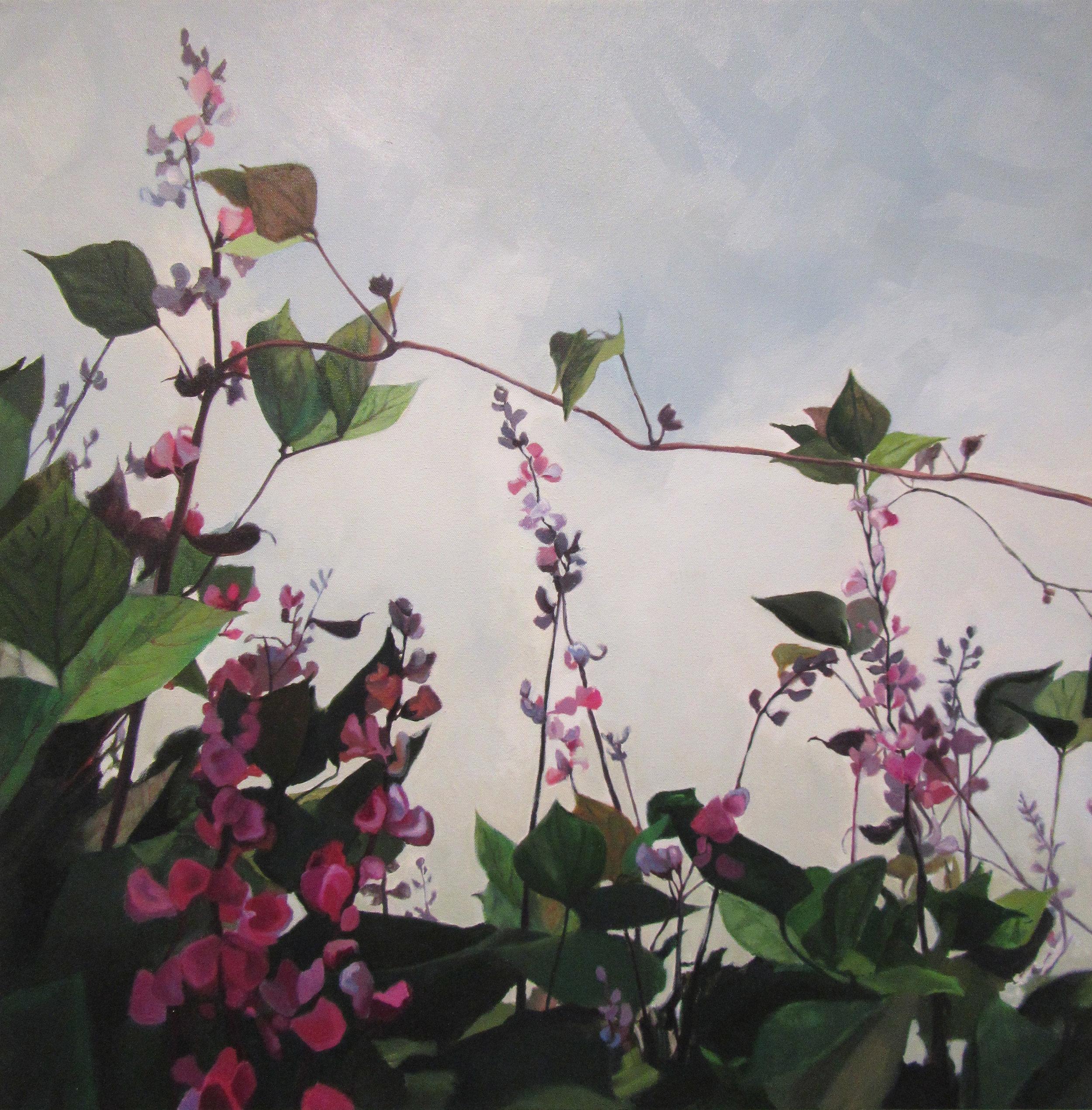 Hyacinth Bean Vine2