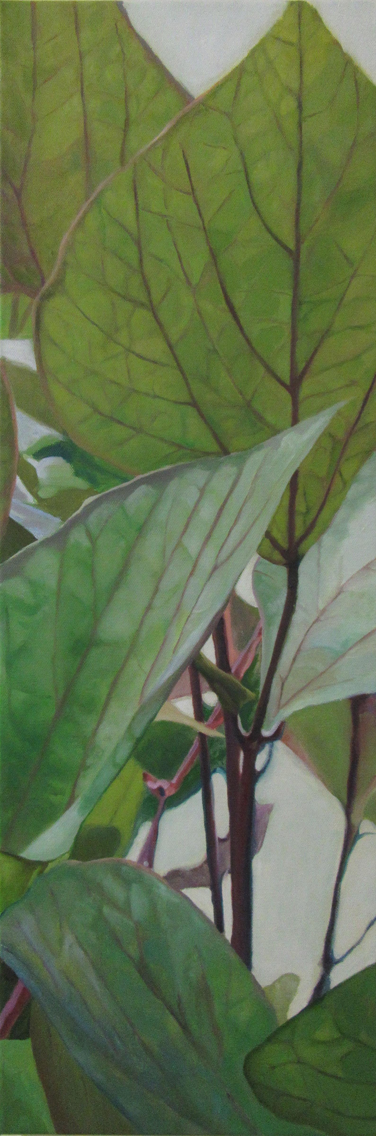 Hyacinth Bean Vine3