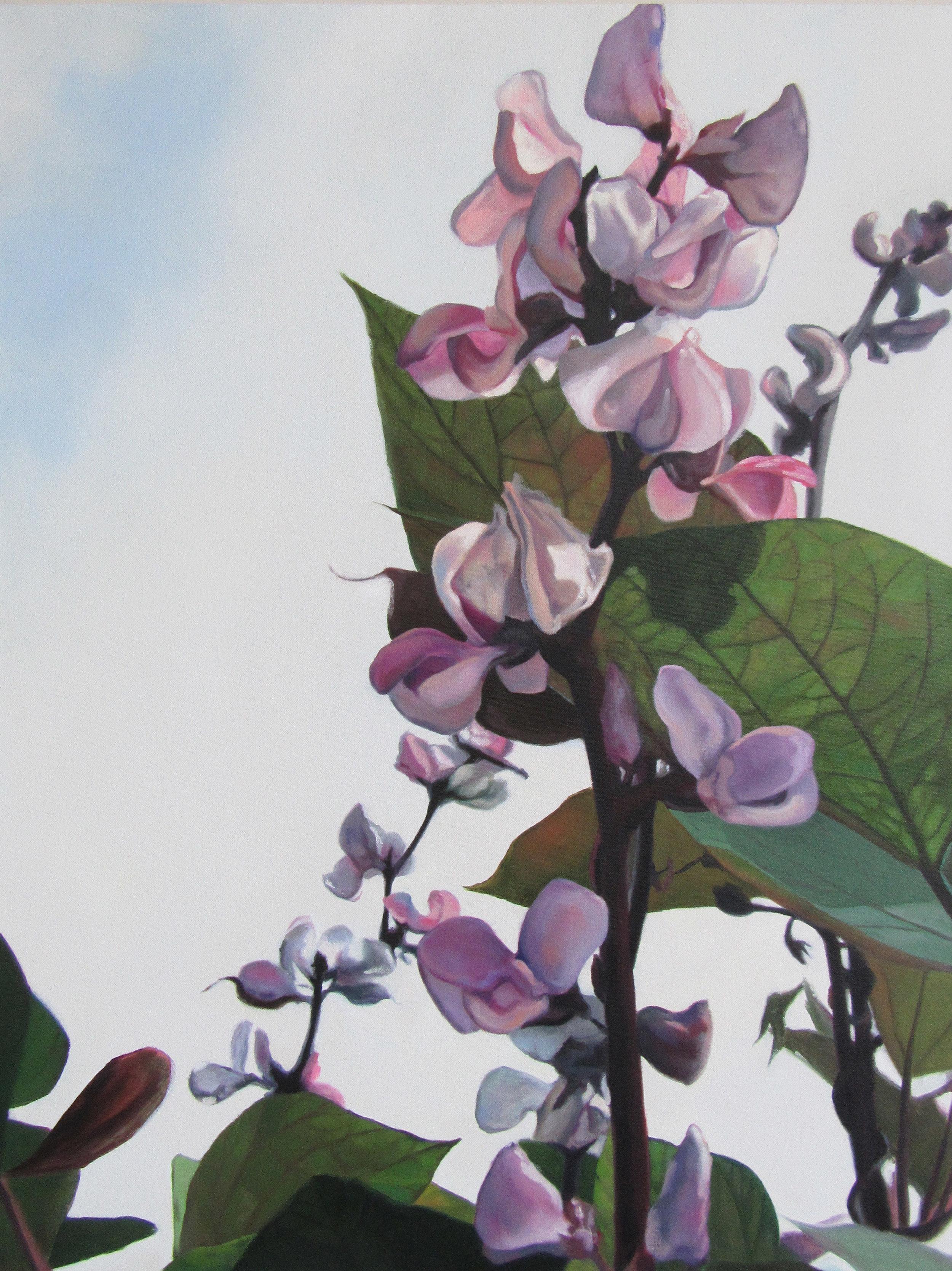 Hyacinth Bean Vine1