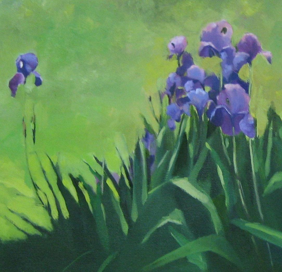 Connie's Irises