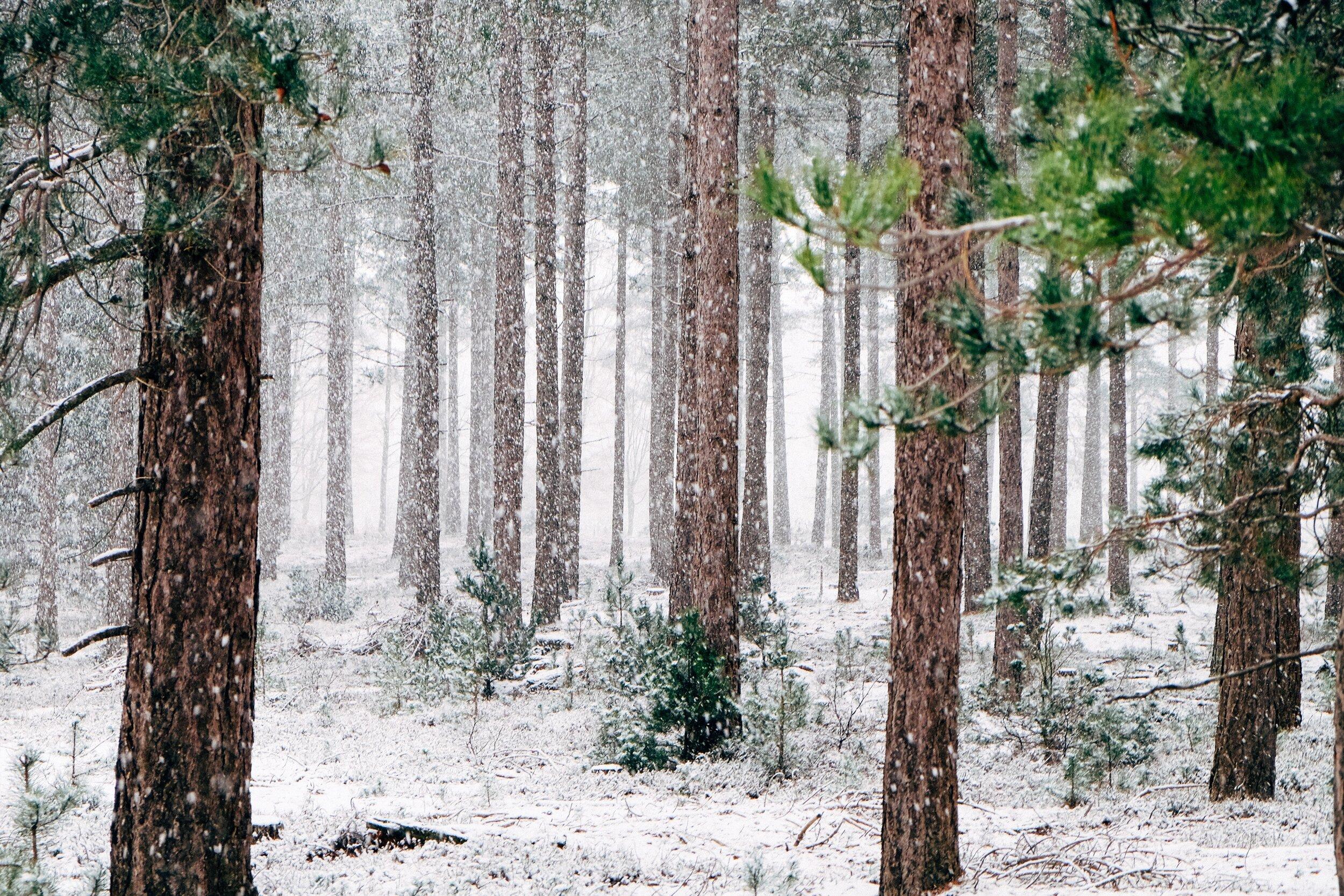 NarniaSnowyWoods.jpg