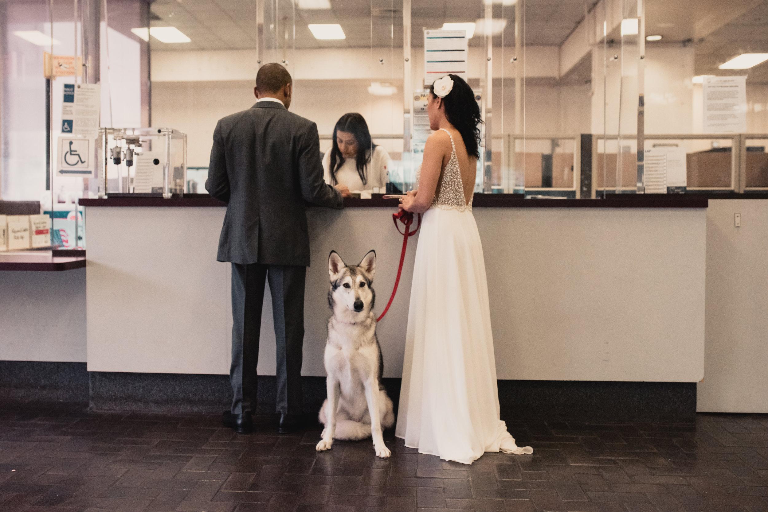 DogWedding_Wolfdog_Wedding