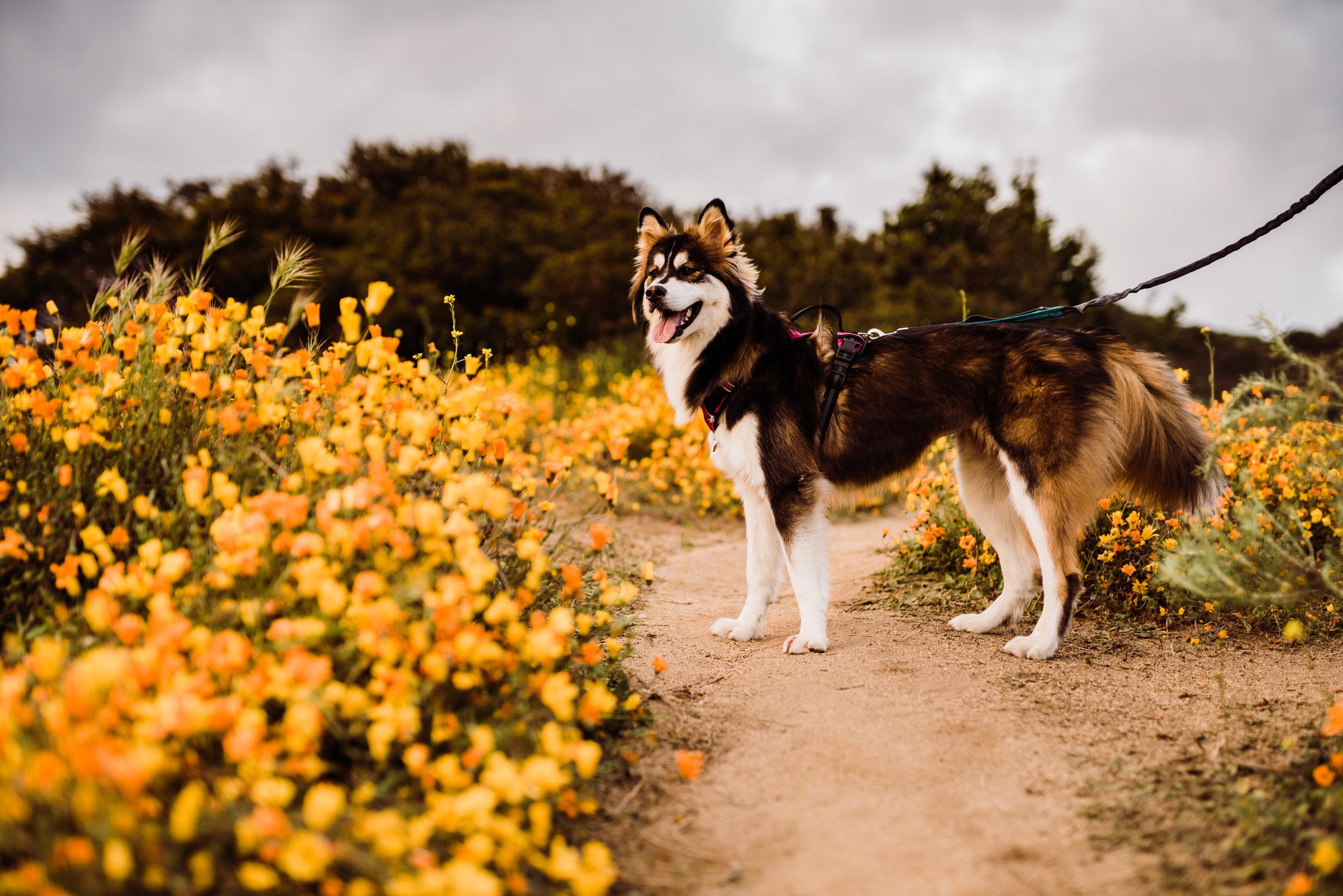 Lucy in the flower fields