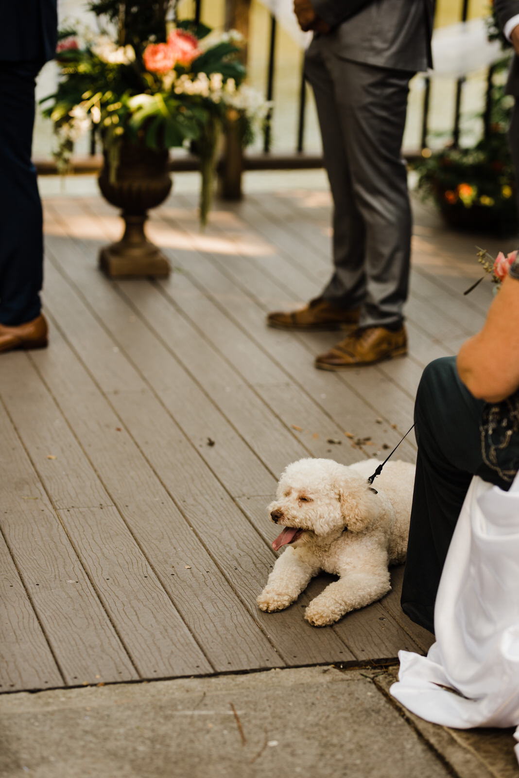 poodle at ceremony at Roswell River landing