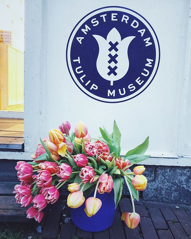 TIL that tulips are not native to Holland — most tulips originated in central Asia 🌷💐🌷 #asiarepresent #thanksasia