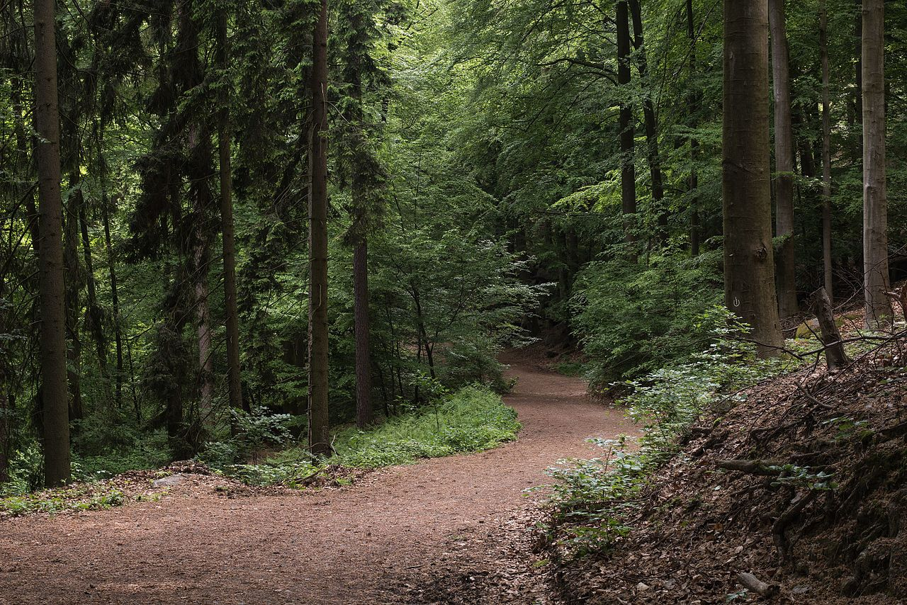 Forest_path_and_trees low res.jpg