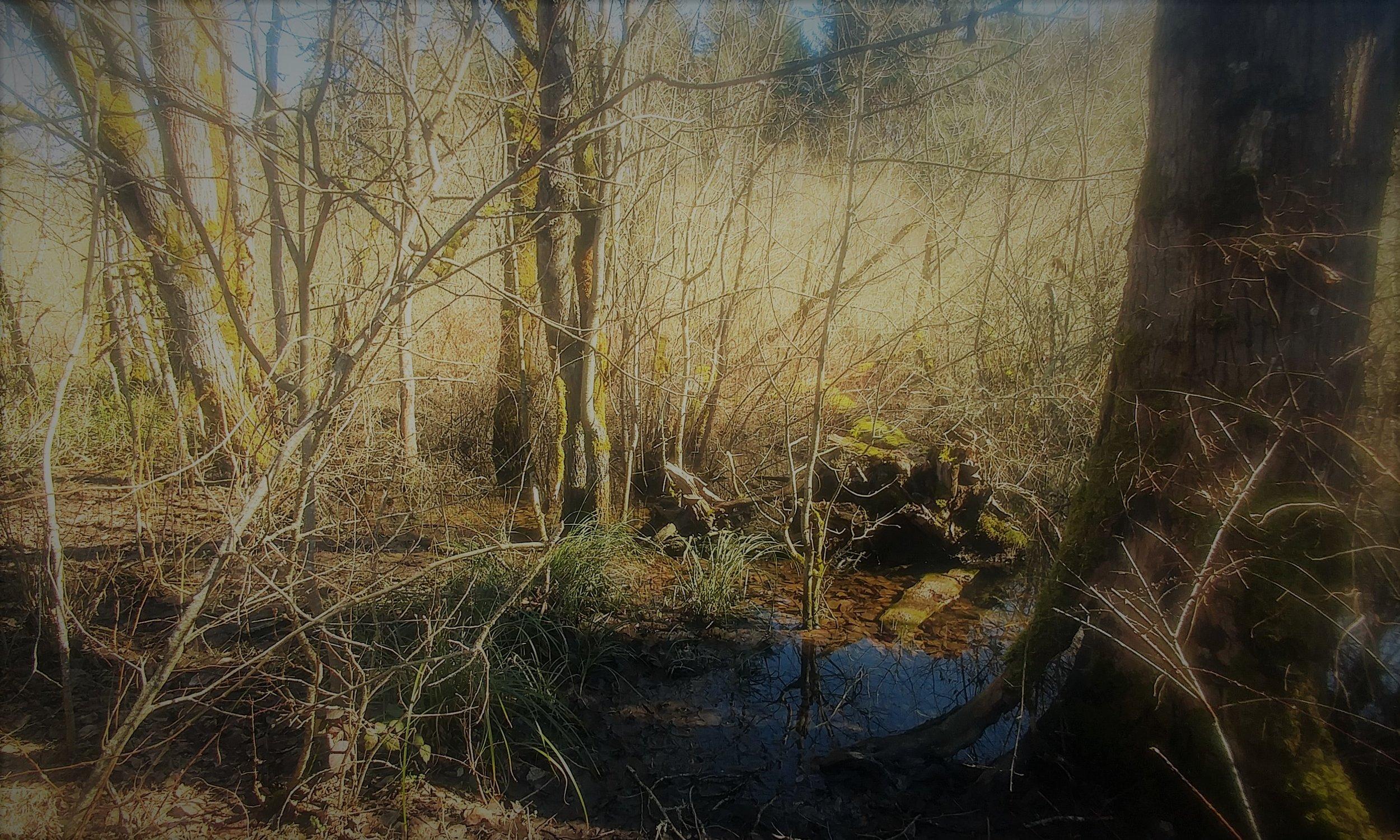 Snake Lake.jpg