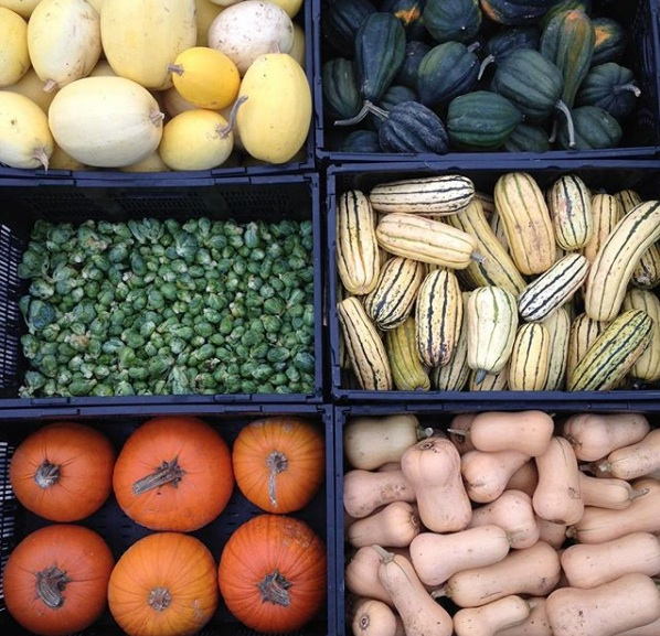 fall crops.jpg