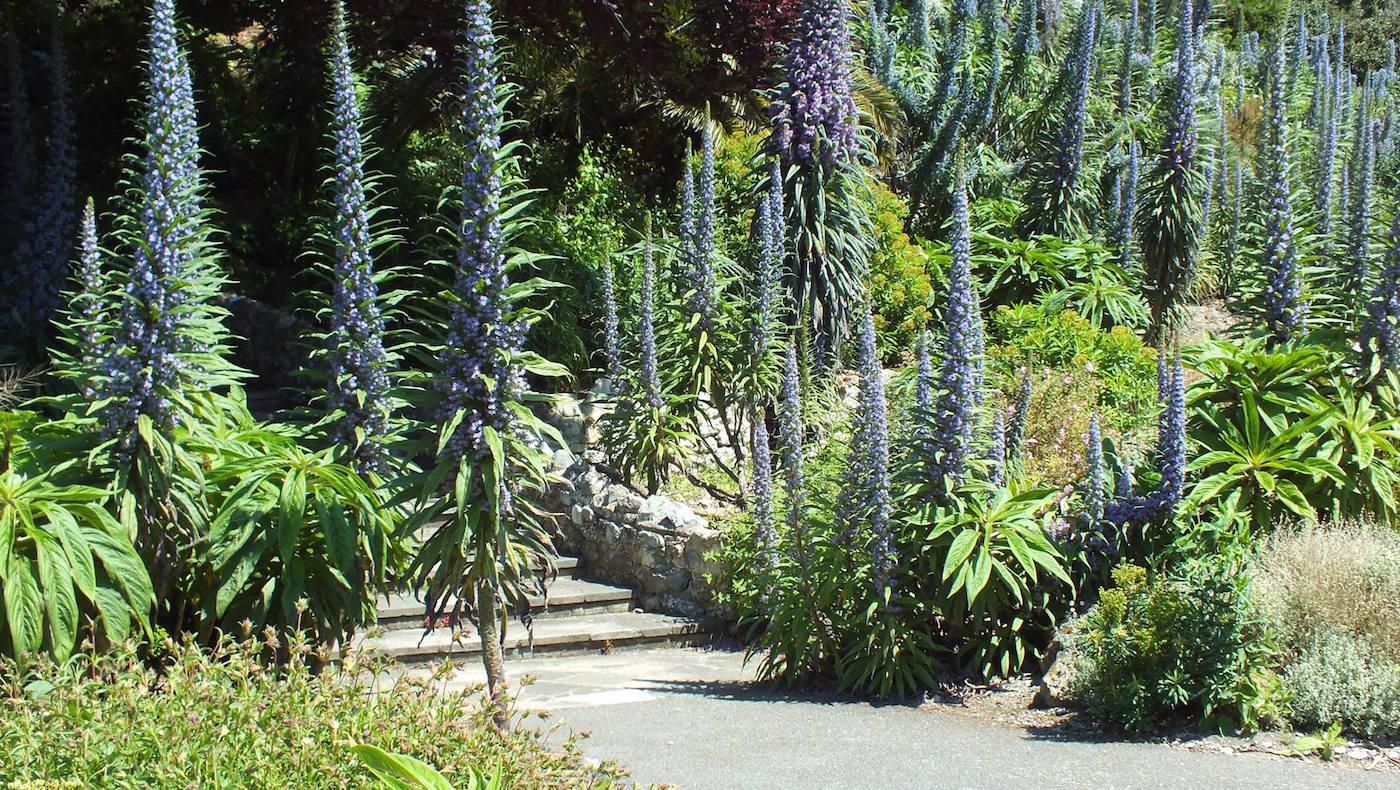 Ventnor-Botanic-Garden-2.jpg