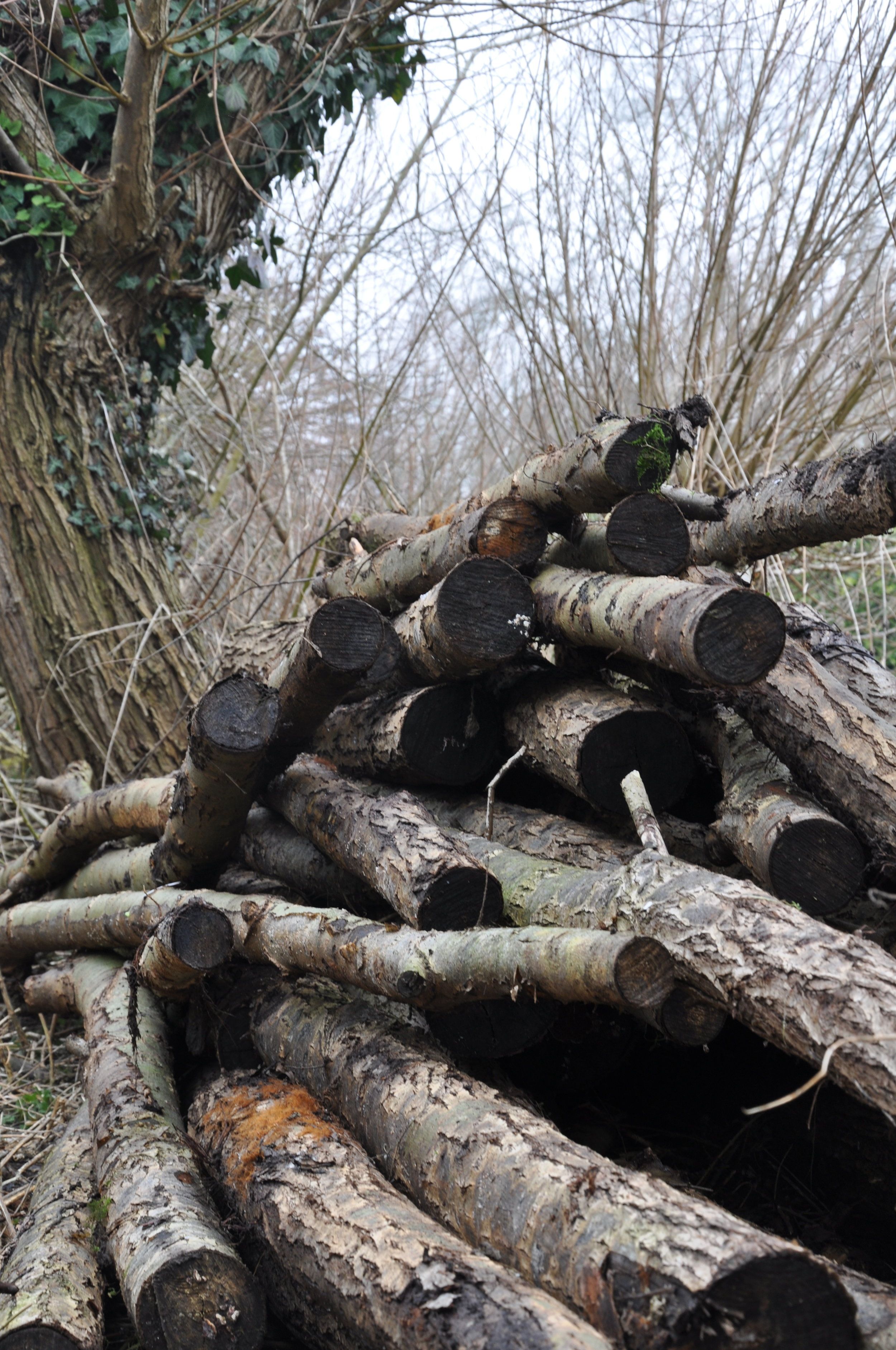 The Log reserved for the insect stockades.