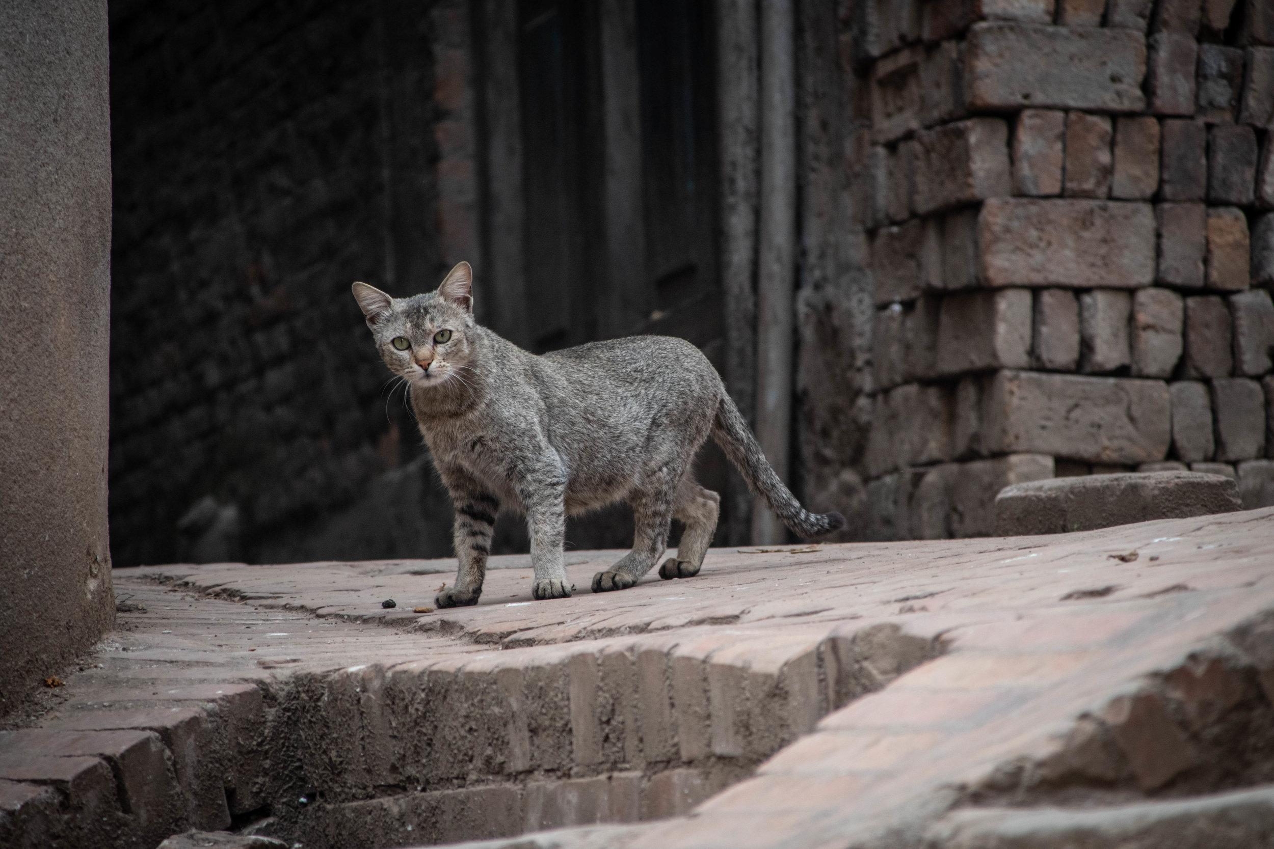 Bhaktapur 19 © SBGD-13.jpg