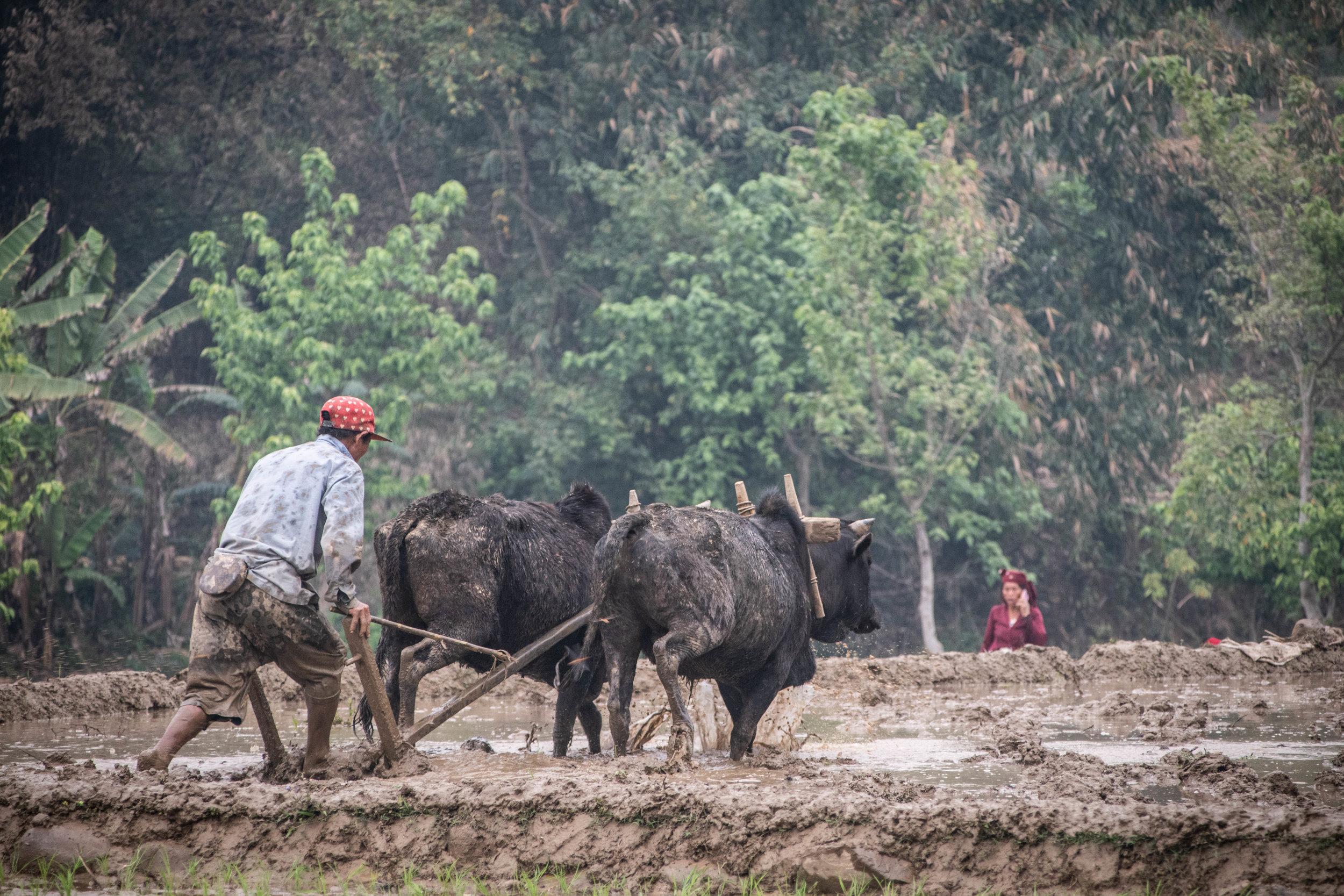 Chitwan 19 © SBGD-8.jpg