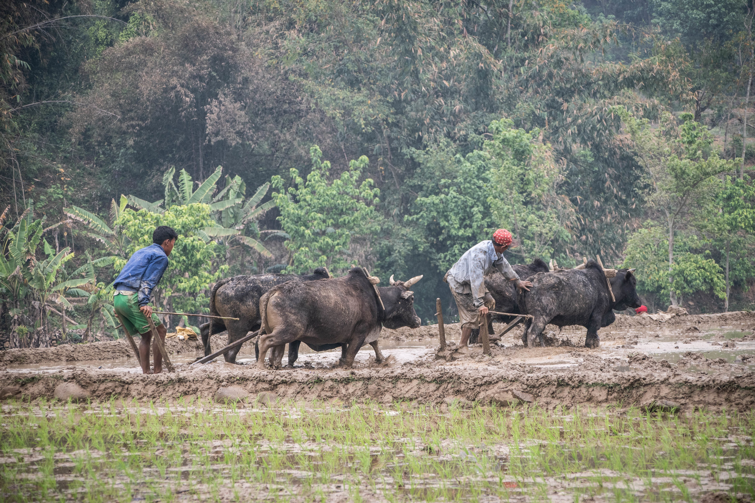 Chitwan 19 © SBGD-9.jpg