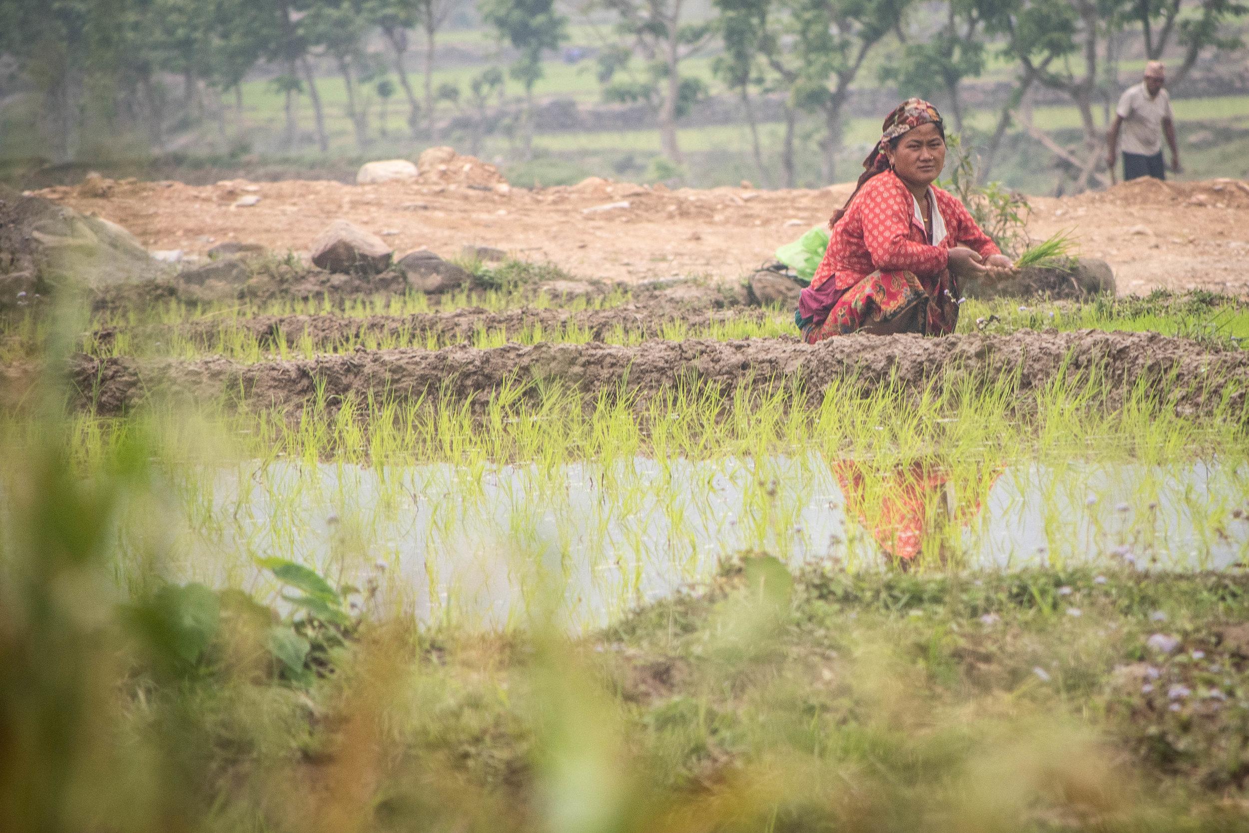 Chitwan 19 © SBGD-12.jpg