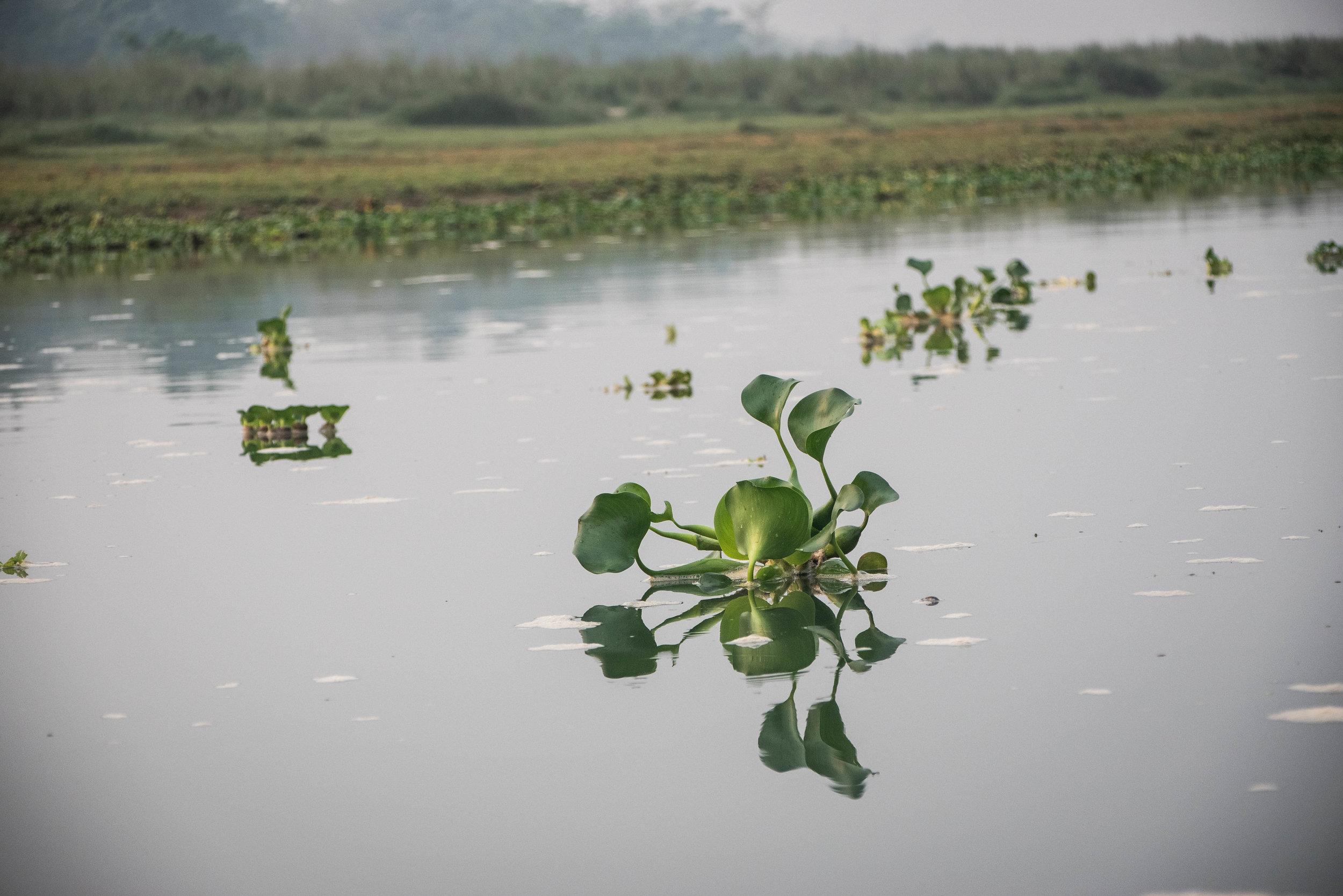 Chitwan 19 © SBGD-58.jpg