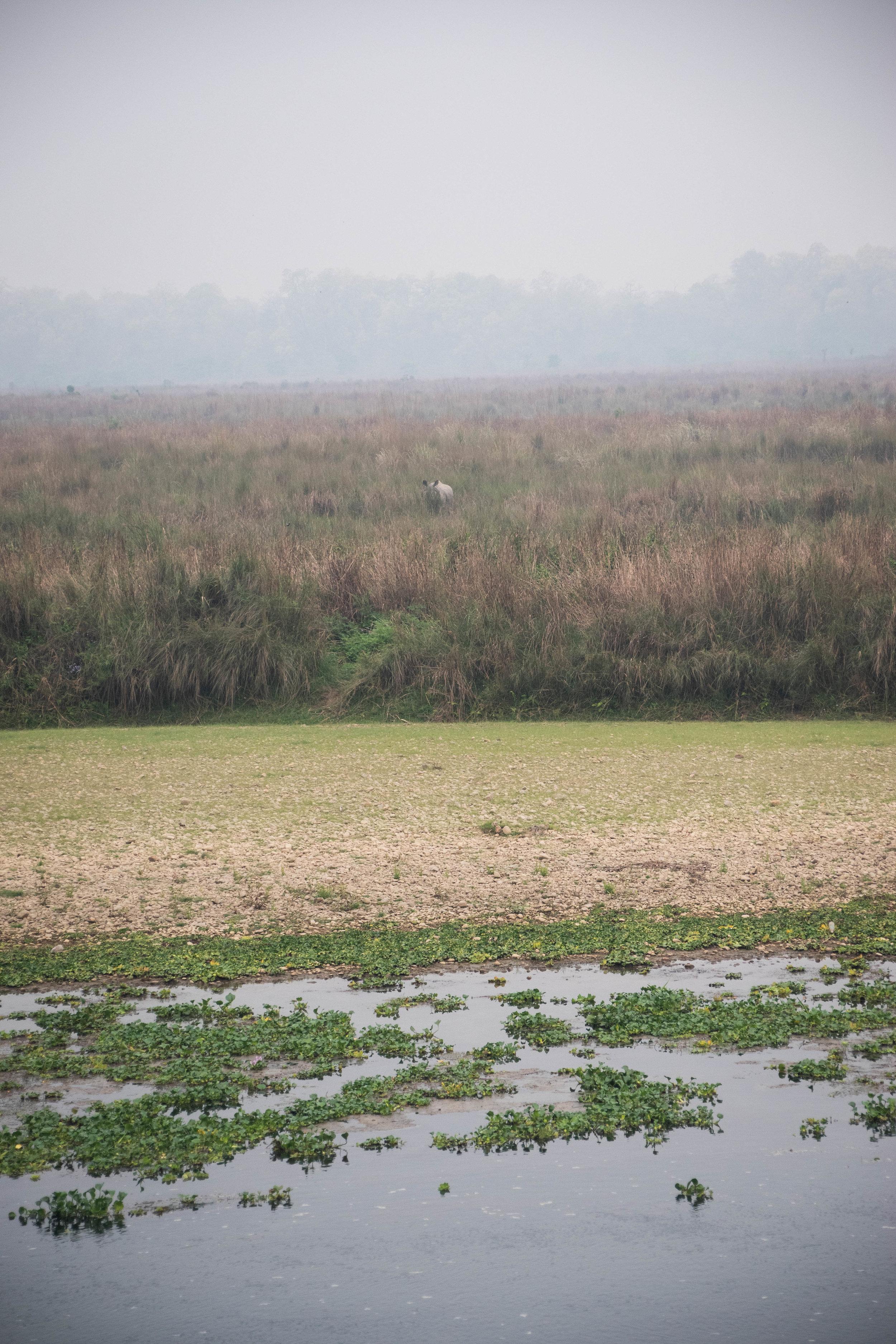 Chitwan 19 © SBGD-71.jpg