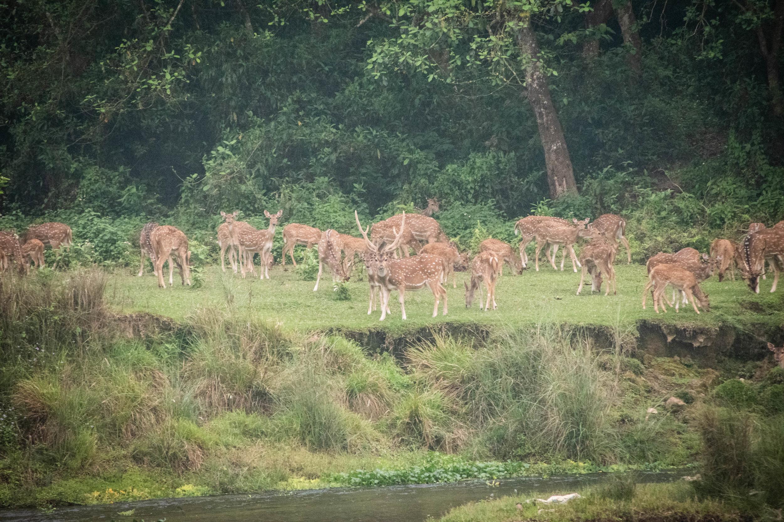 Chitwan 19 © SBGD-37.jpg