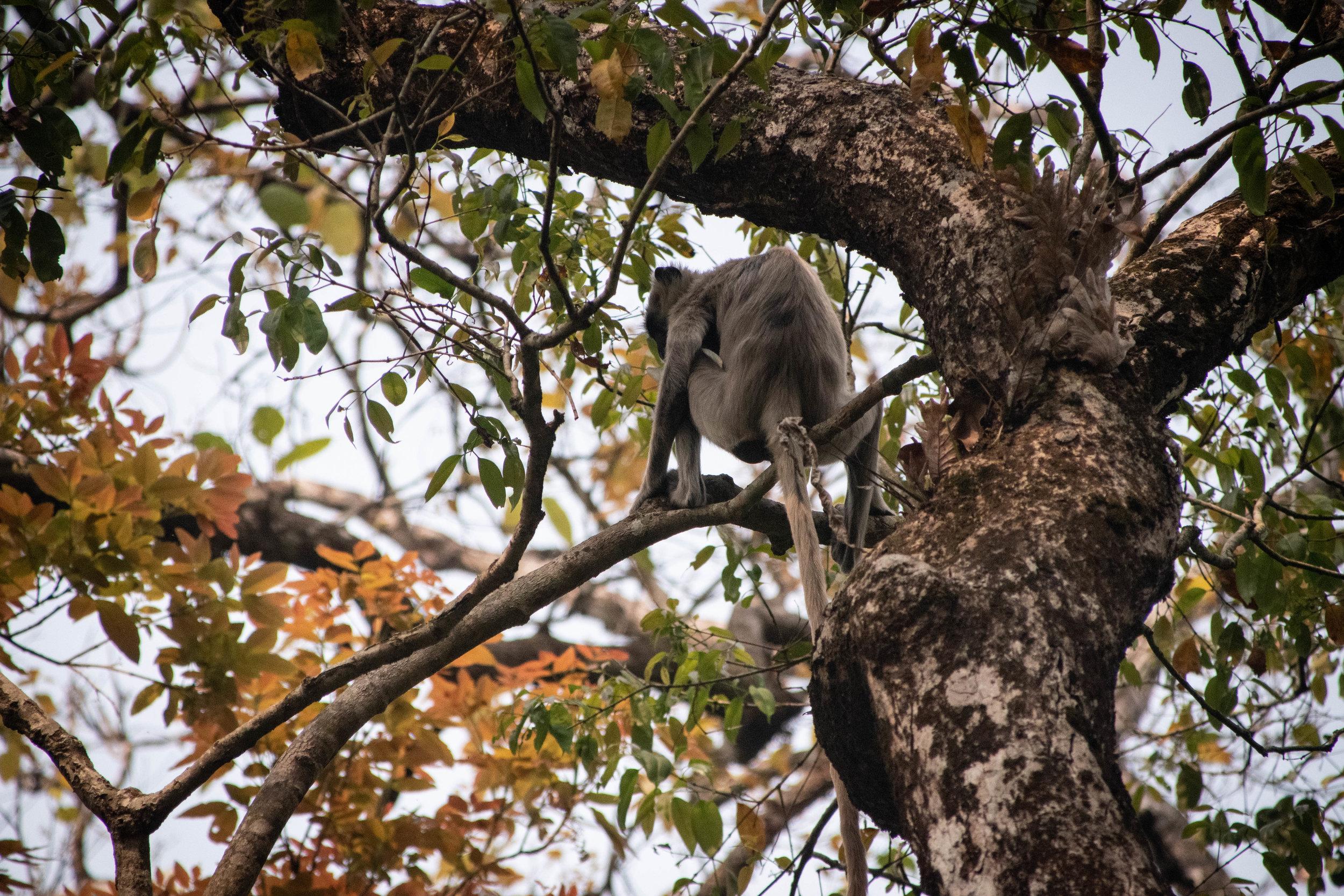 Chitwan 19 © SBGD-100.jpg