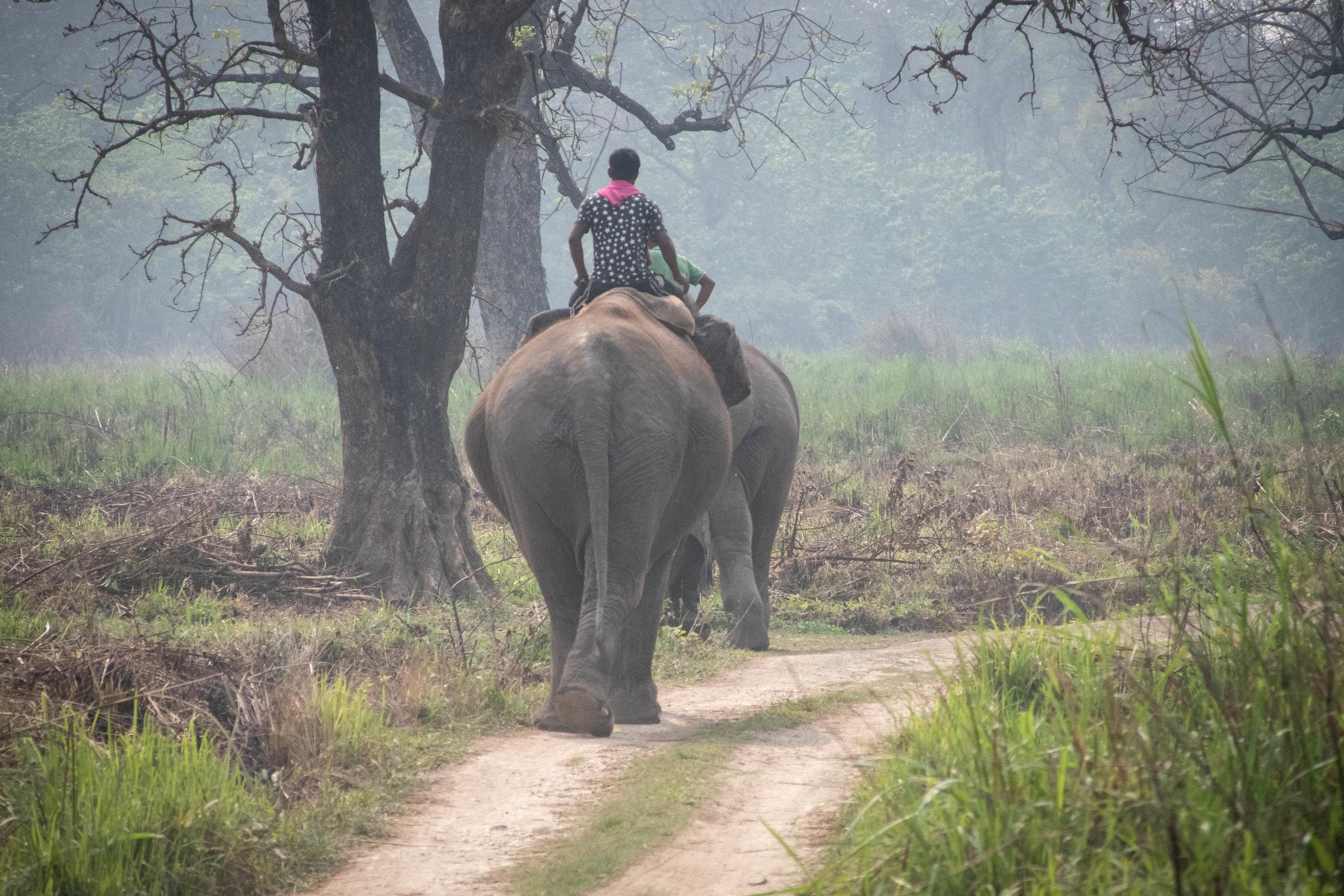 Chitwan 19 © SBGD-111.jpg