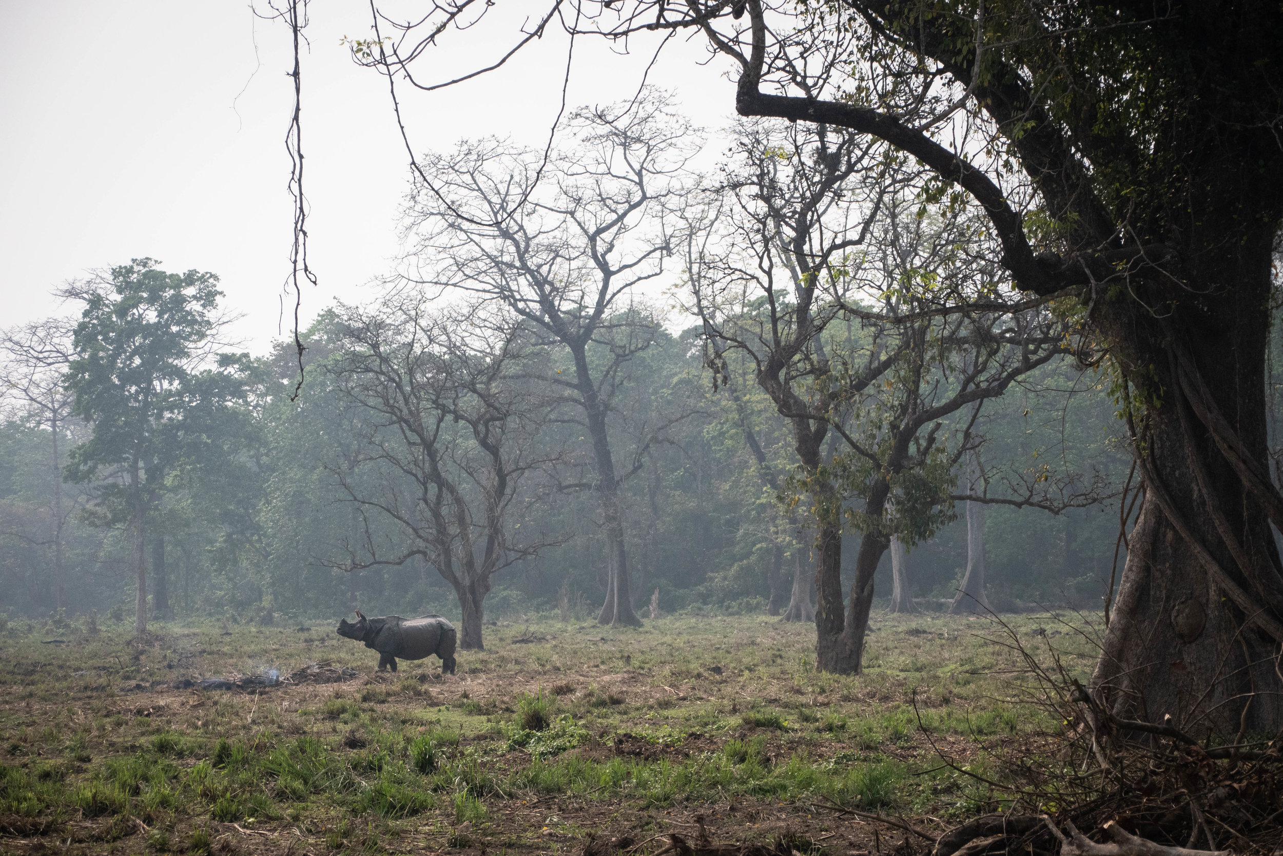 Chitwan 19 © SBGD-115.jpg