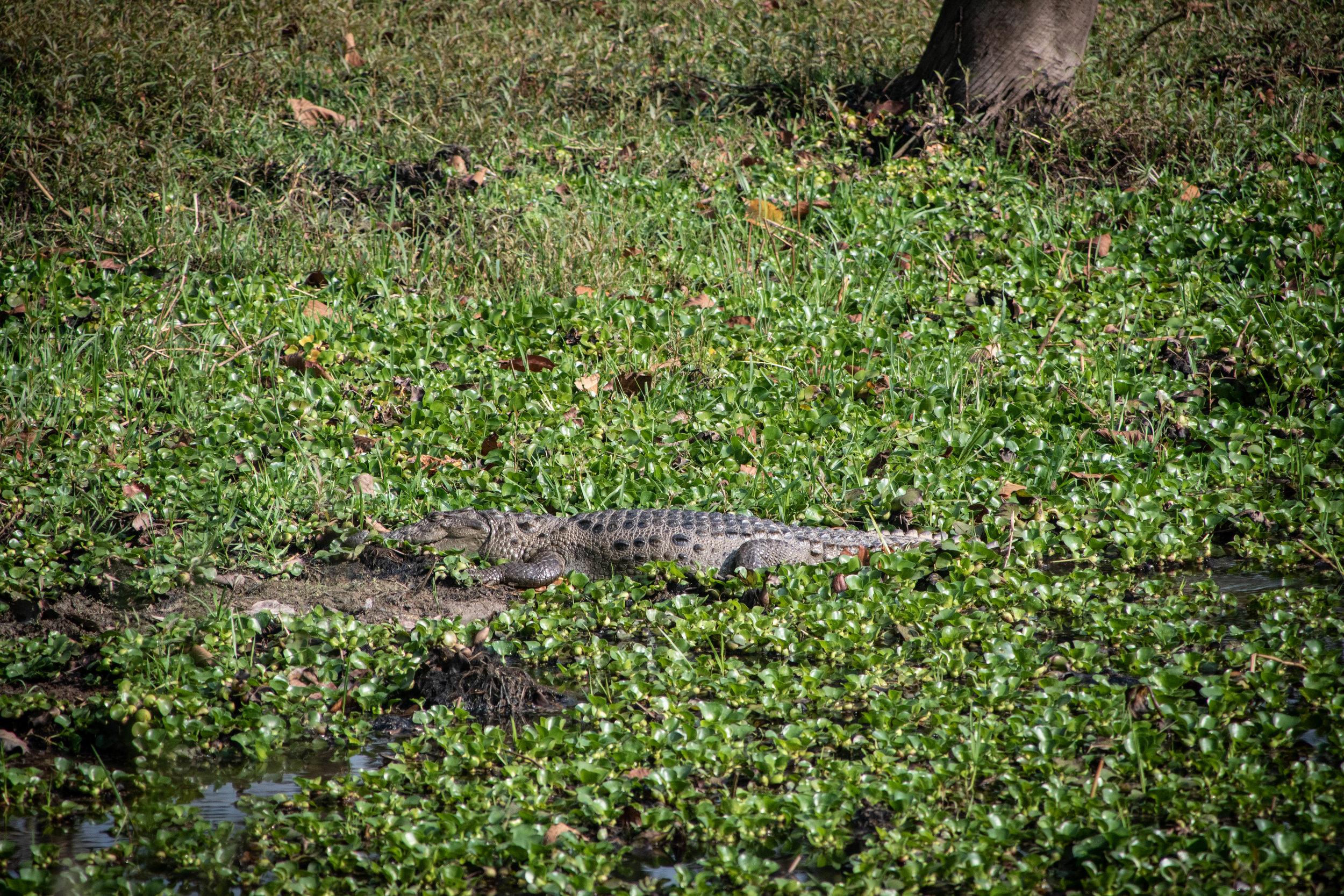 Chitwan Safari 19 © SBGD-9.jpg