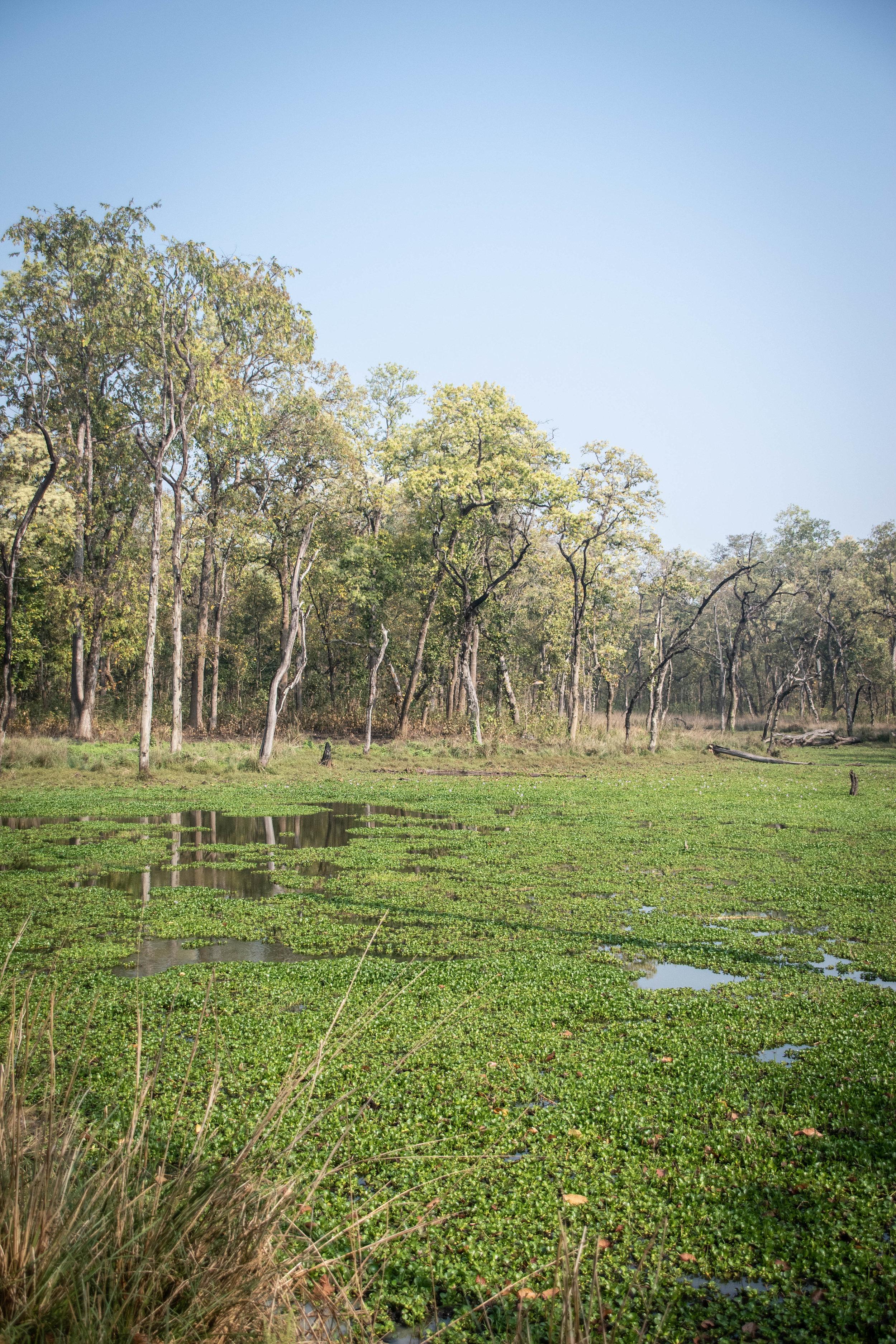 Chitwan Safari 19 © SBGD-8.jpg