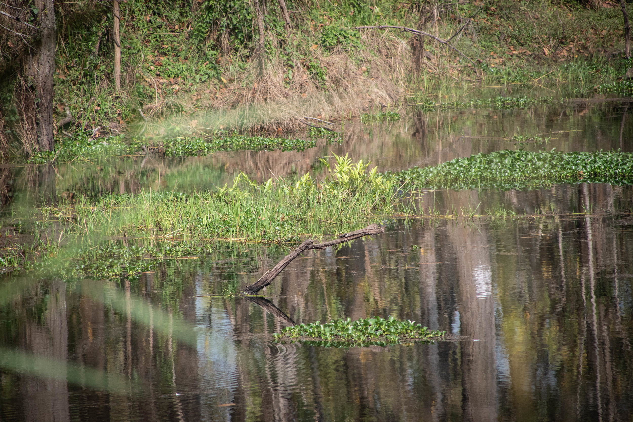 Chitwan Safari 19 © SBGD-24.jpg