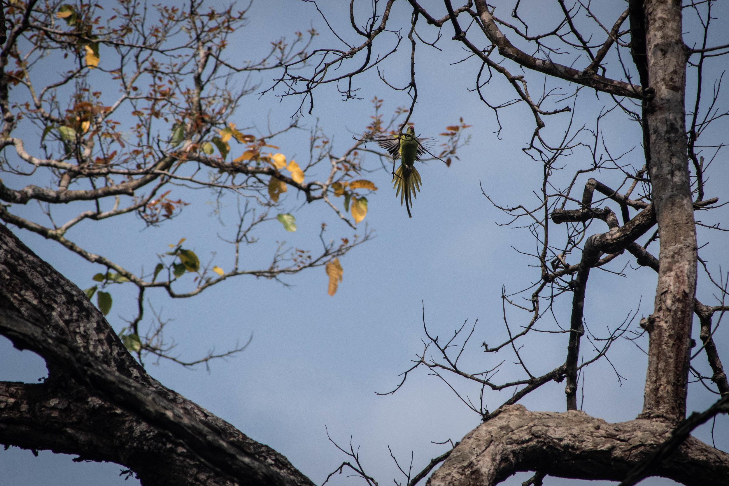 Chitwan Safari 19 © SBGD-27.jpg