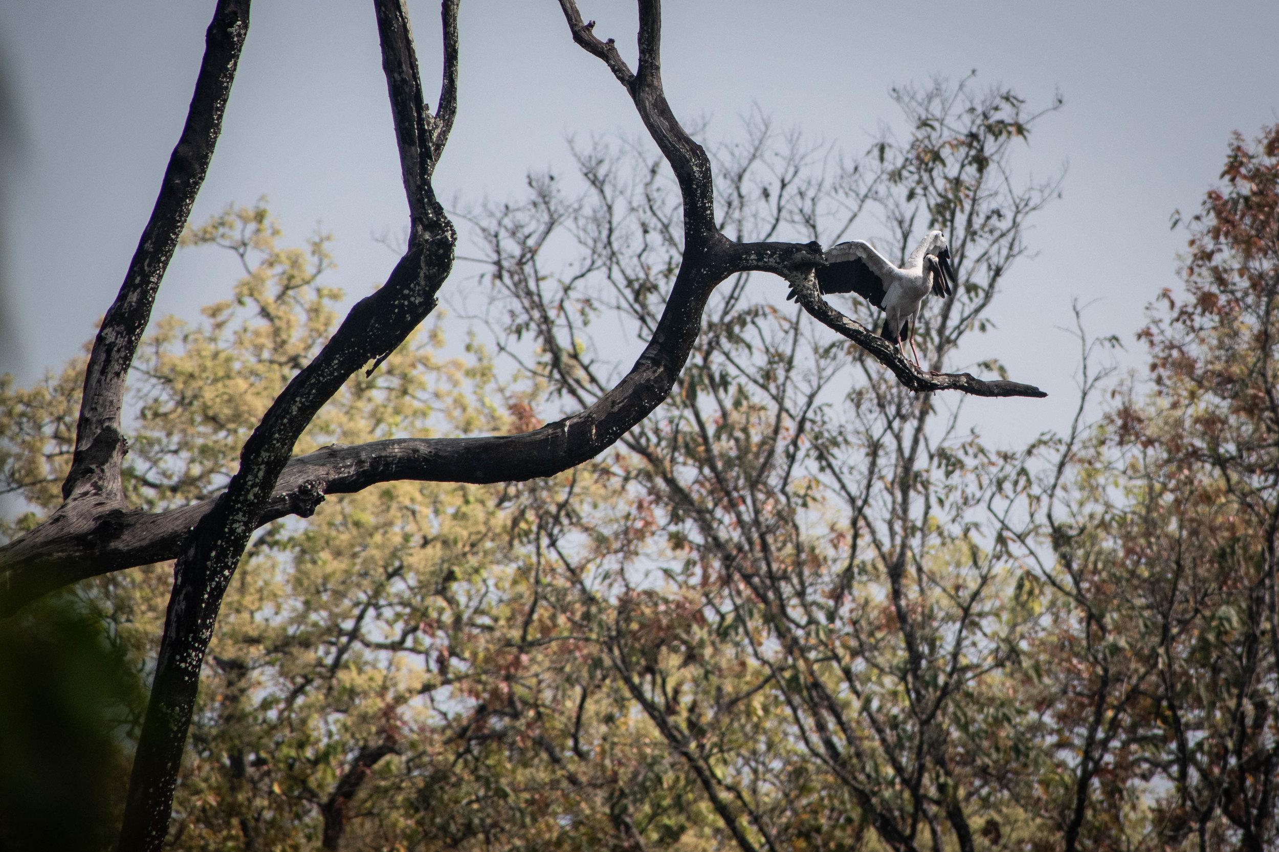 Chitwan Safari 19 © SBGD-28.jpg