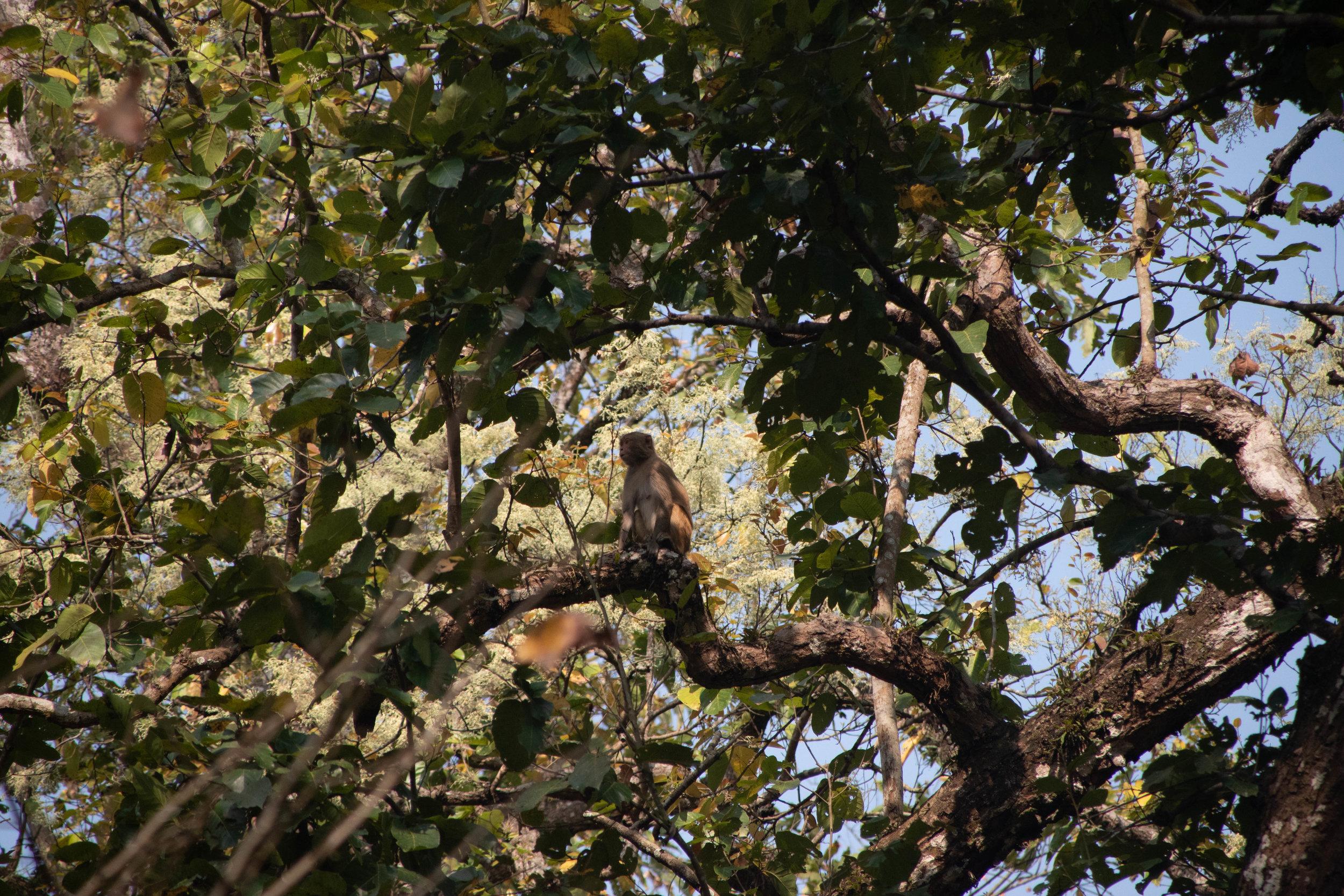 Chitwan Safari 19 © SBGD-12.jpg