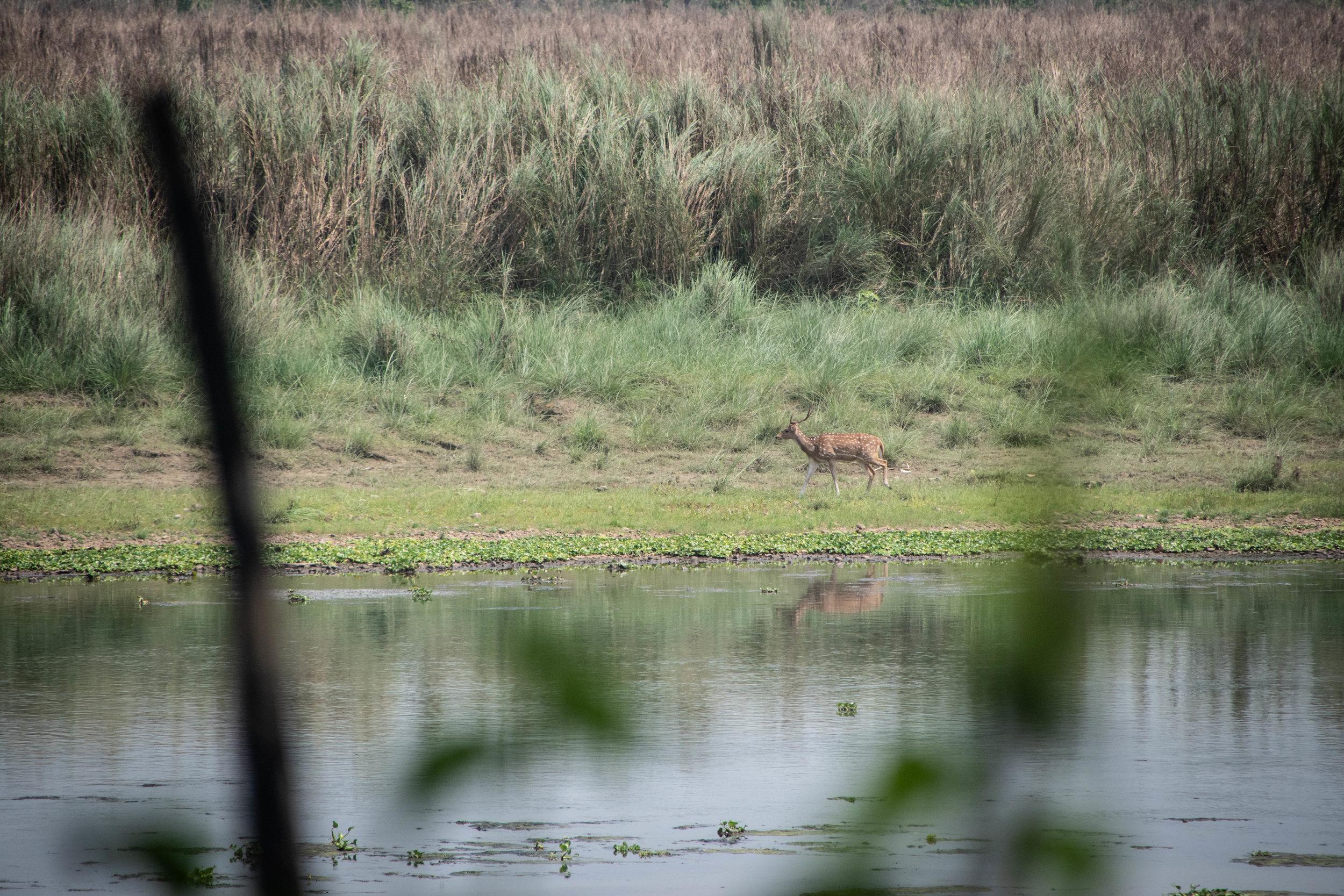 Chitwan Safari 19 © SBGD-45.jpg
