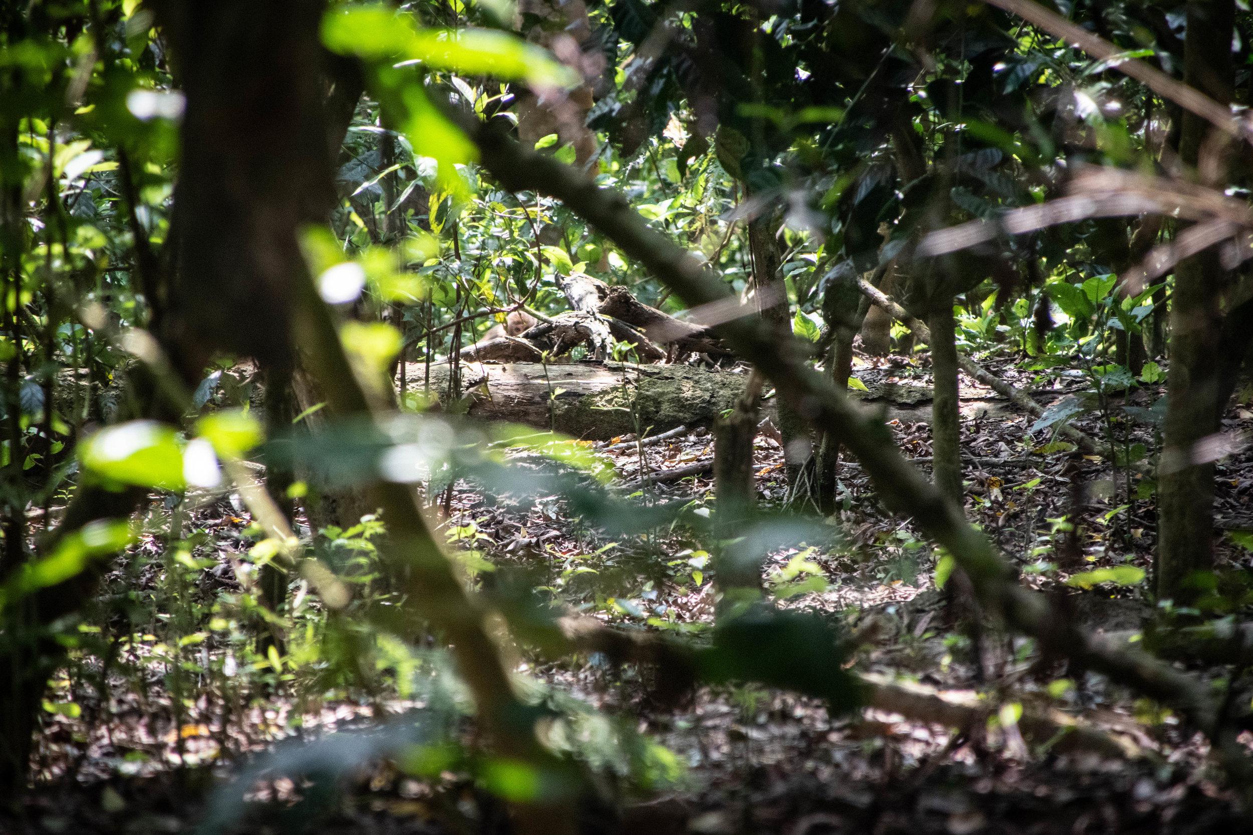 Chitwan Safari 19 © SBGD-37.jpg