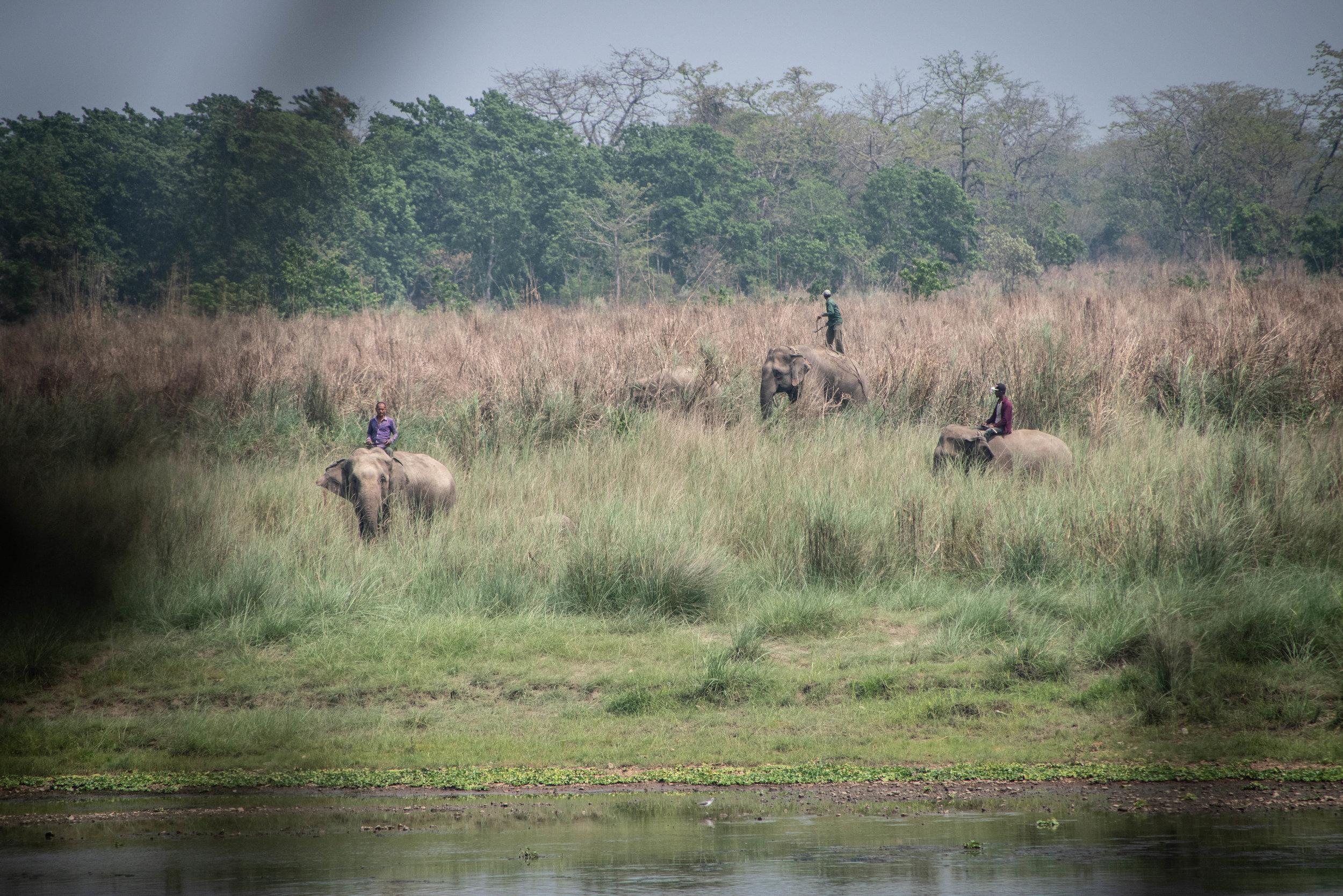 Chitwan Safari 19 © SBGD-50.jpg