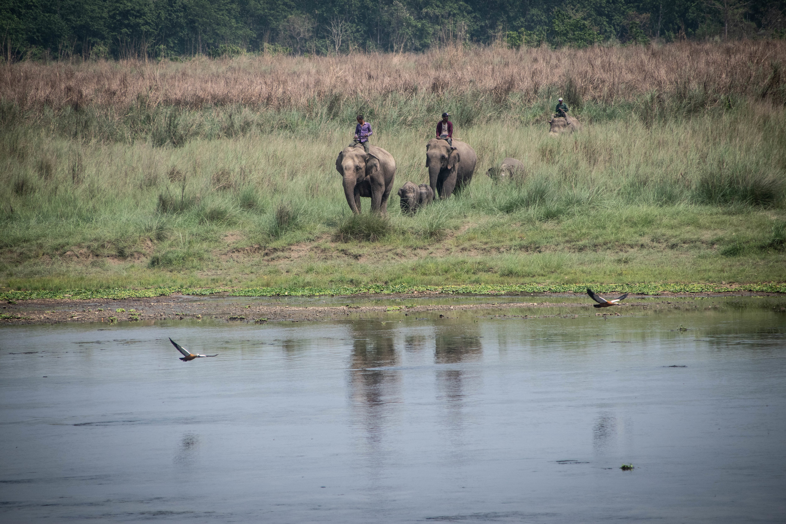 Chitwan Safari 19 © SBGD-52.jpg