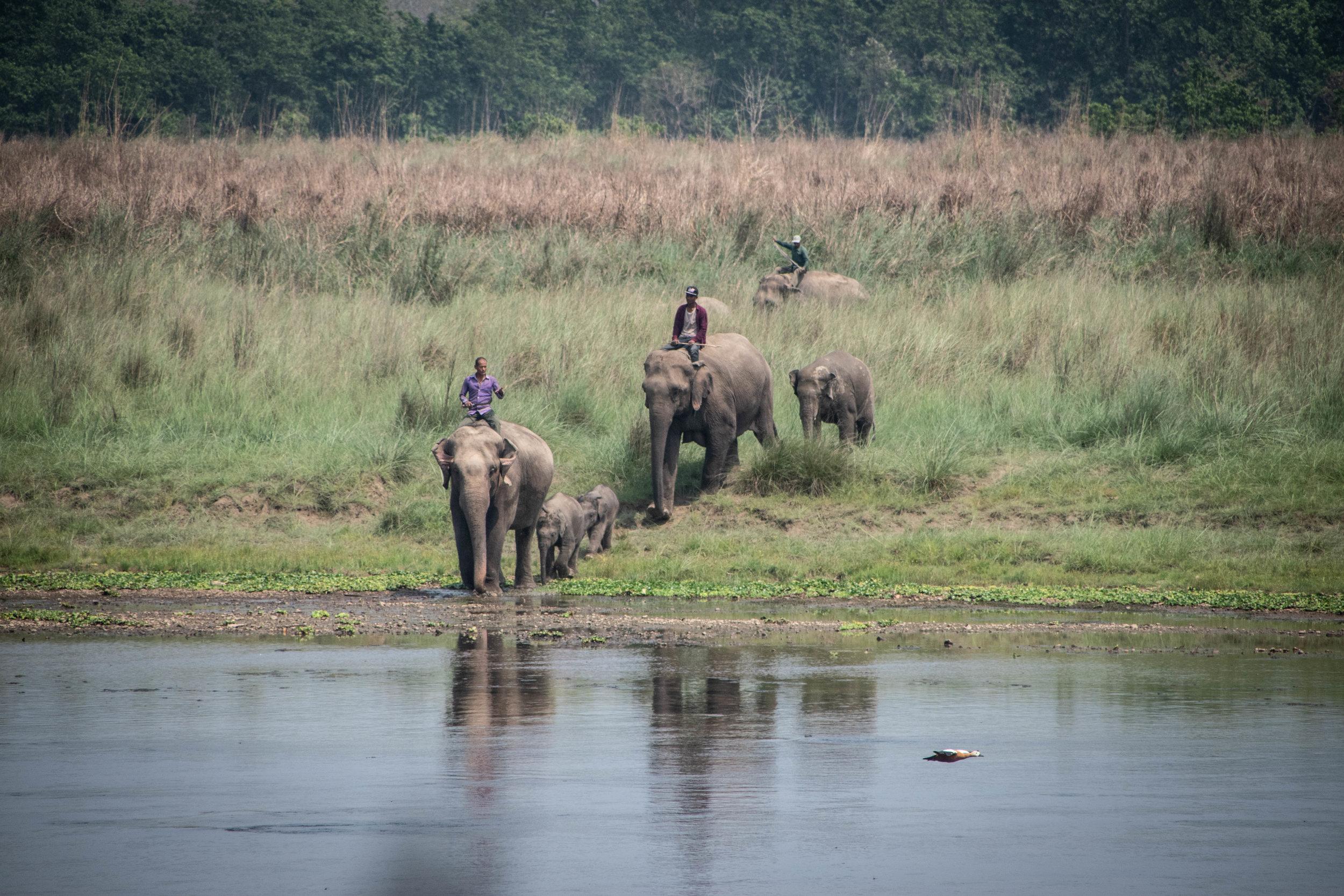 Chitwan Safari 19 © SBGD-53.jpg