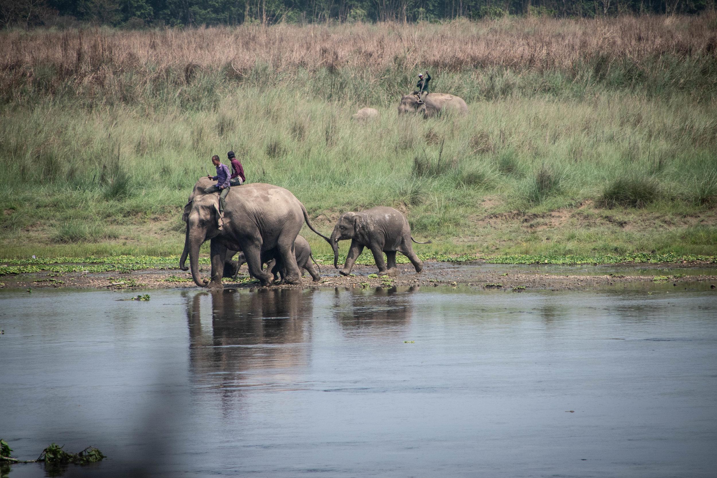 Chitwan Safari 19 © SBGD-54.jpg