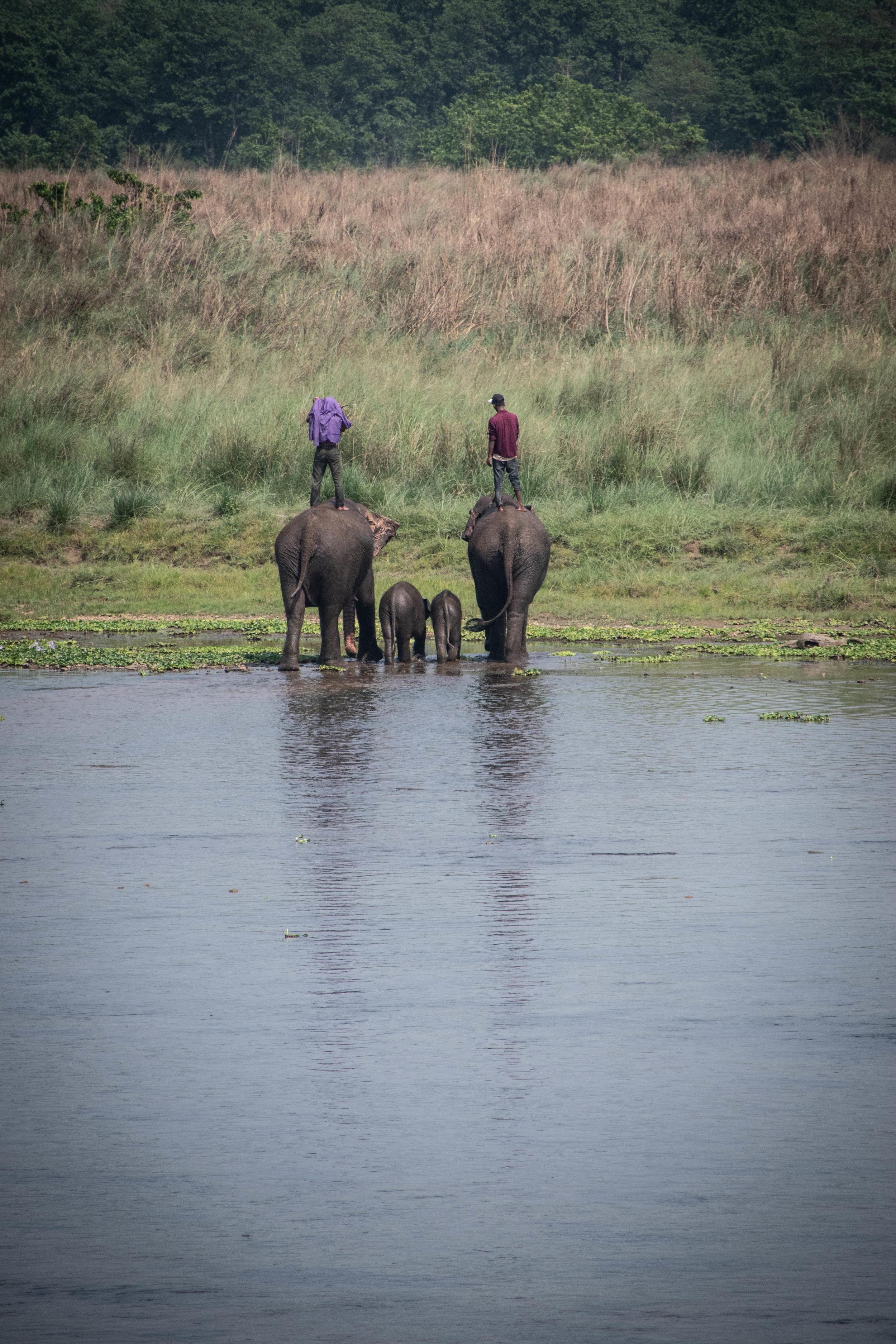 Chitwan Safari 19 © SBGD-58.jpg