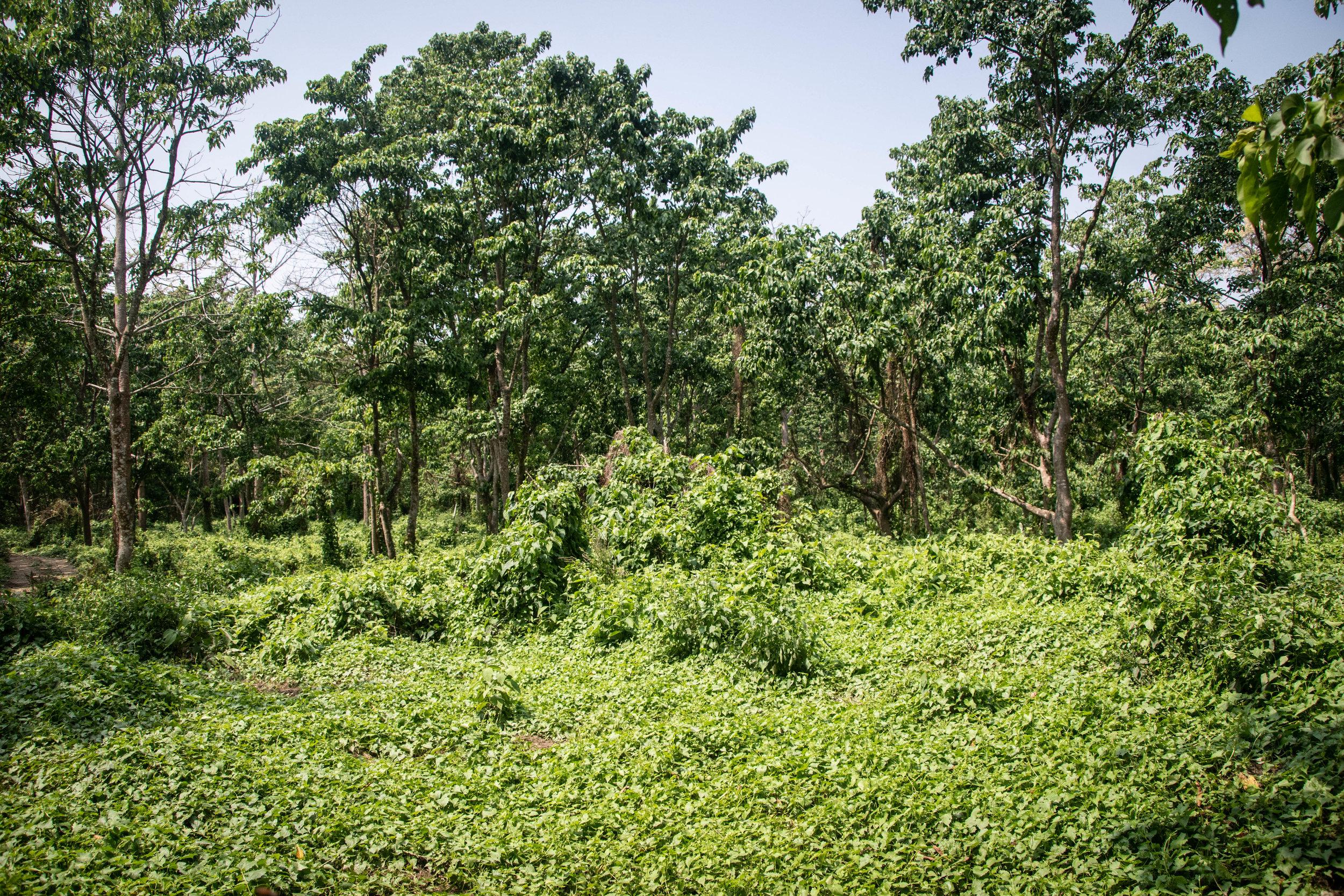Chitwan Safari 19 © SBGD-40.jpg