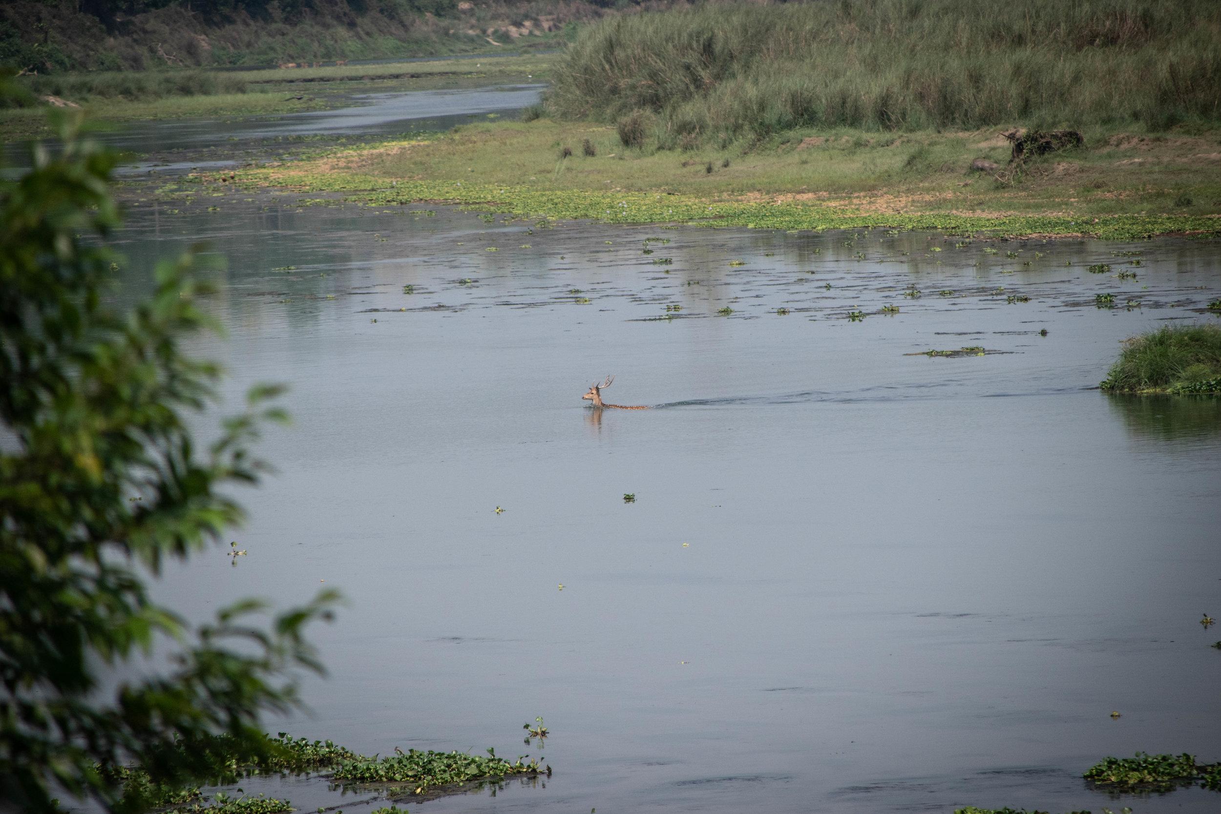 Chitwan Safari 19 © SBGD-61.jpg