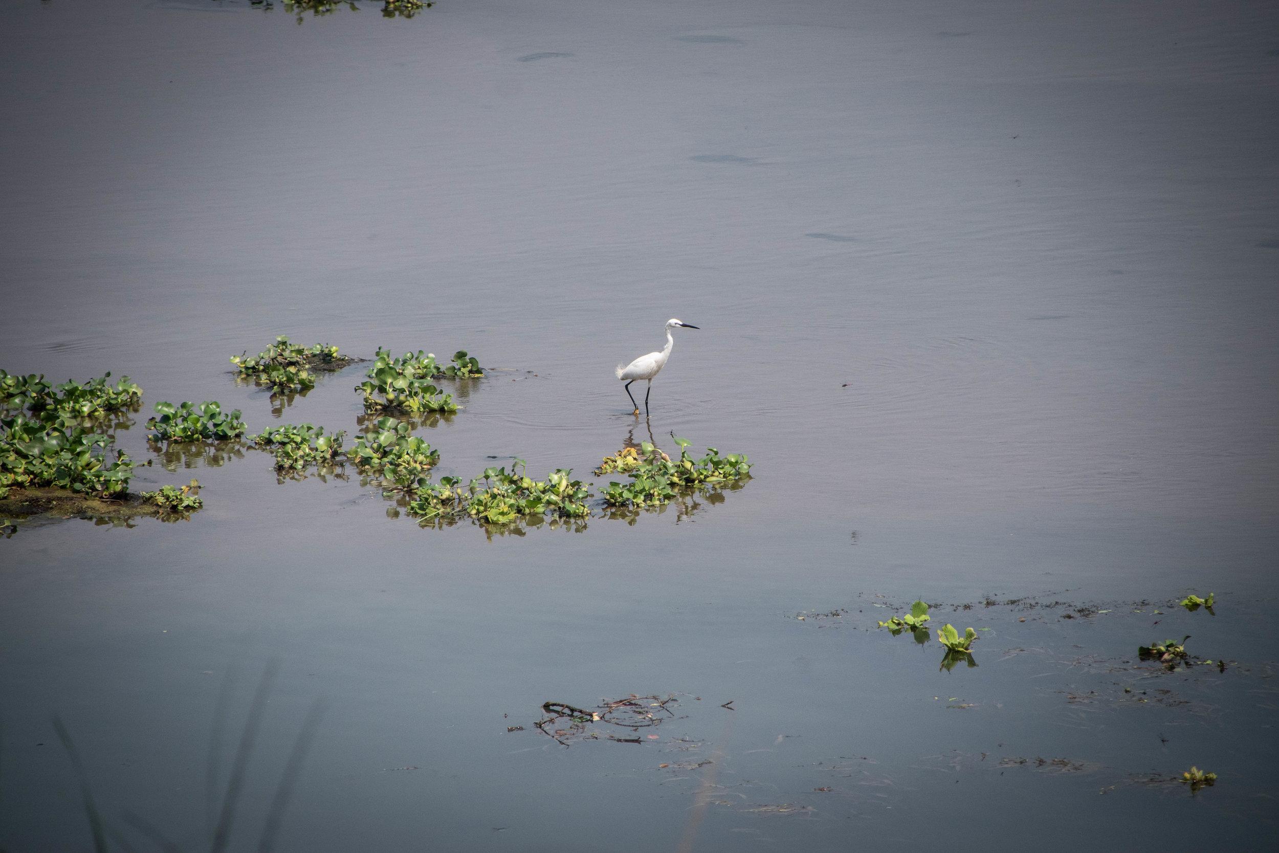 Chitwan Safari 19 © SBGD-62.jpg