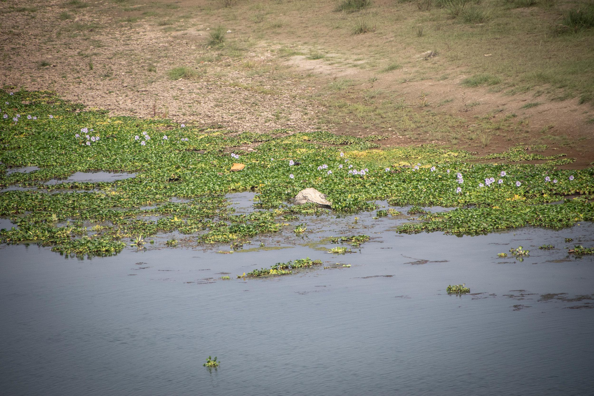 Chitwan Safari 19 © SBGD-66.jpg